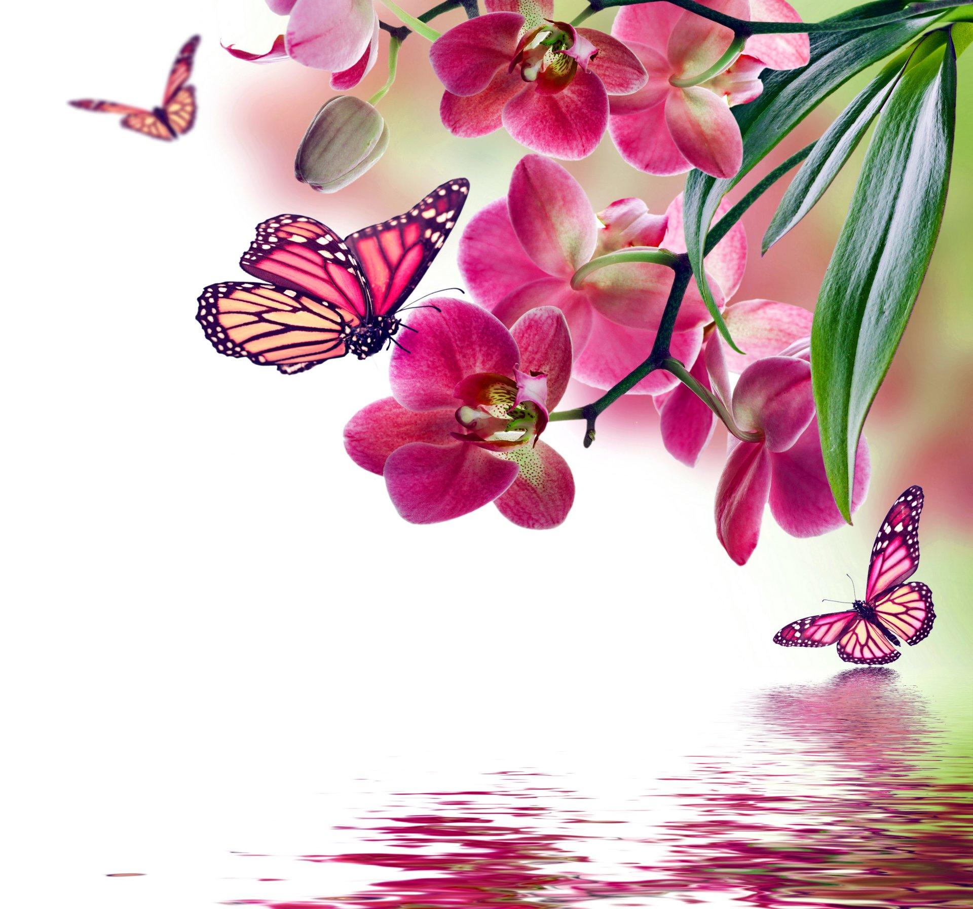 Картинки цветы бабочки
