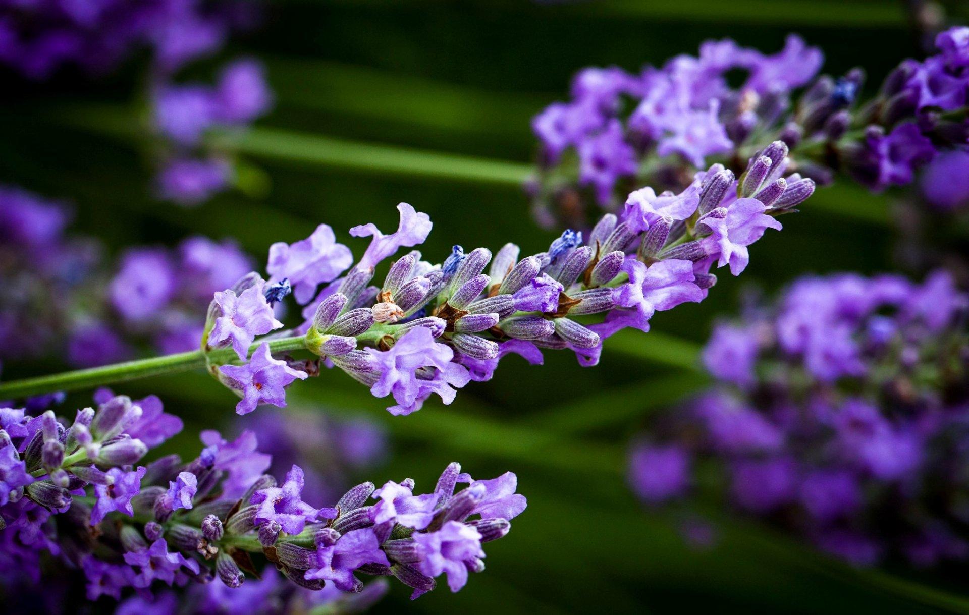 Приколы сделать, картинки с фиолетовыми цветами в высоком качестве