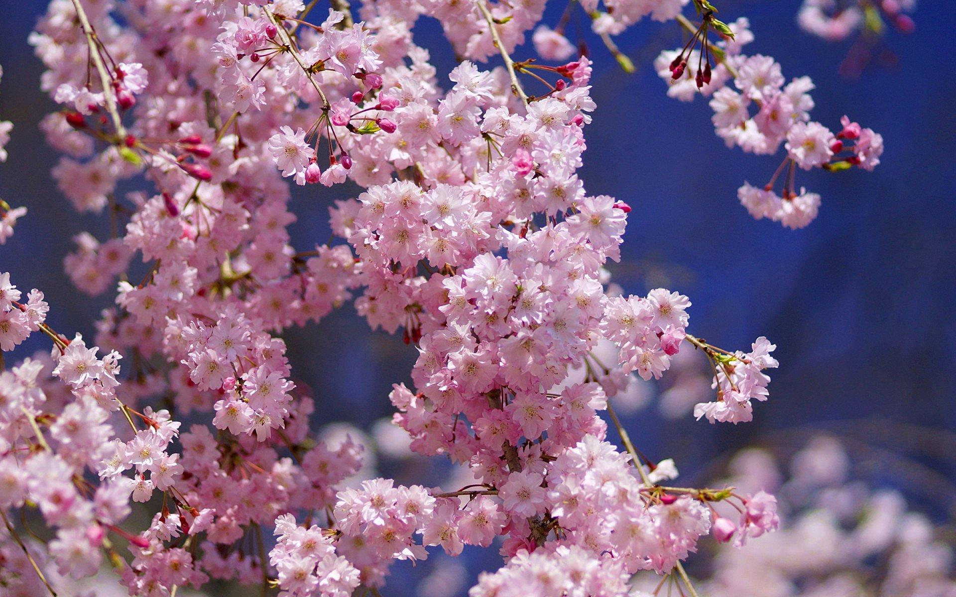 рамки придадут картинки весна на телефон в хорошем качестве более