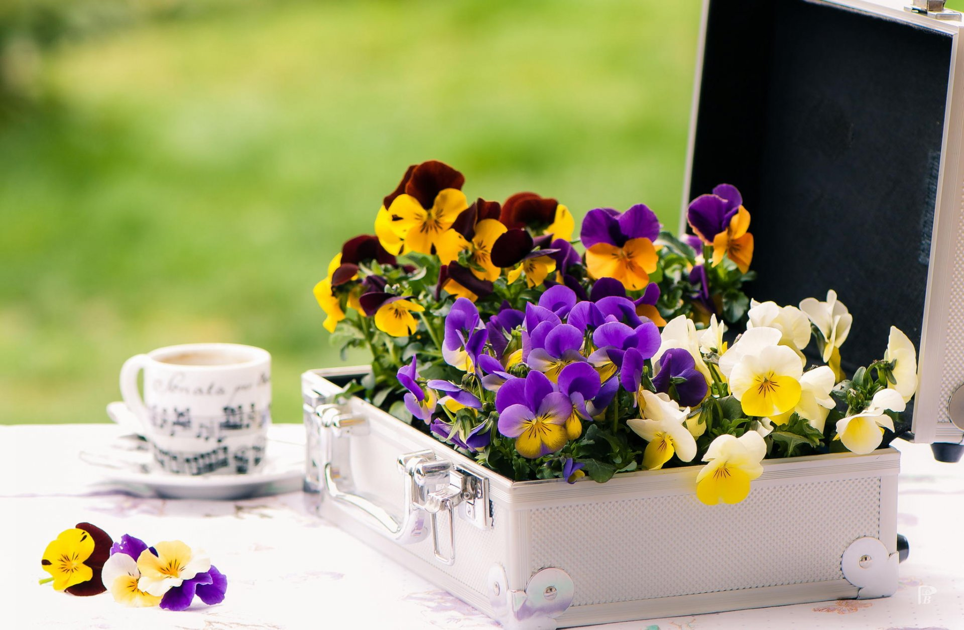 Чемодан и цветы