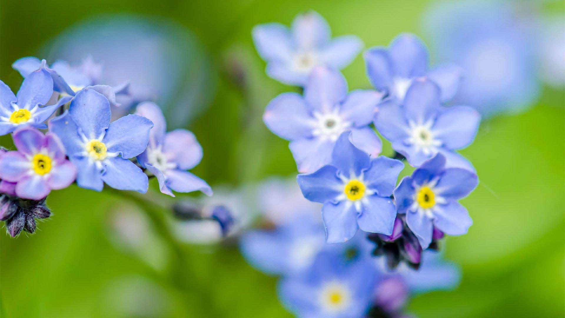 Открытки с синими цветами фото, картинки