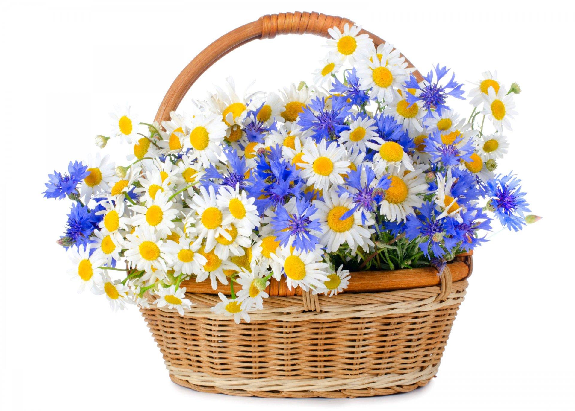 Февраля, красивые открытки с букетами полевых цветов