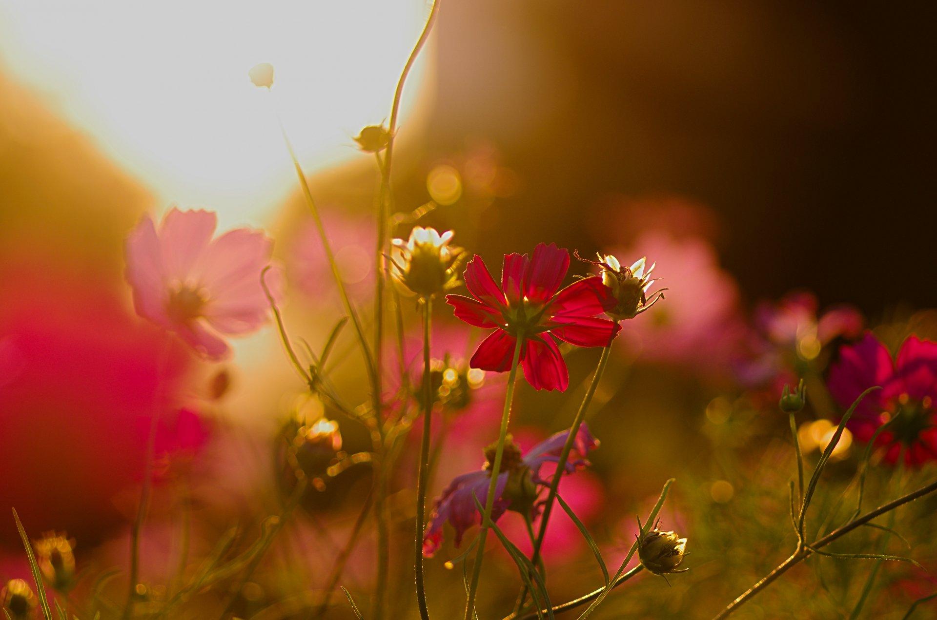 Картинки цветы на фоне заката, спокойной ночи мой