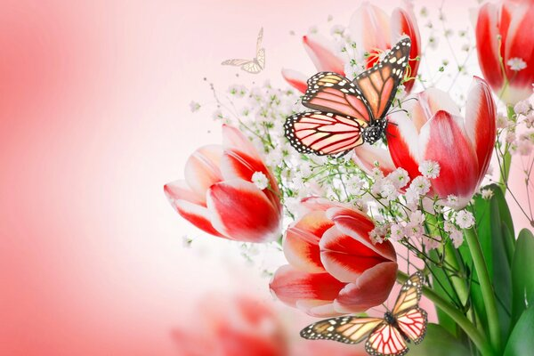 flowers tulips flowers and butterflies flowers tulips pink bouquet butterflies flowers tulips flowers and butterflies цветы тюльпаны розовые букет бабочки