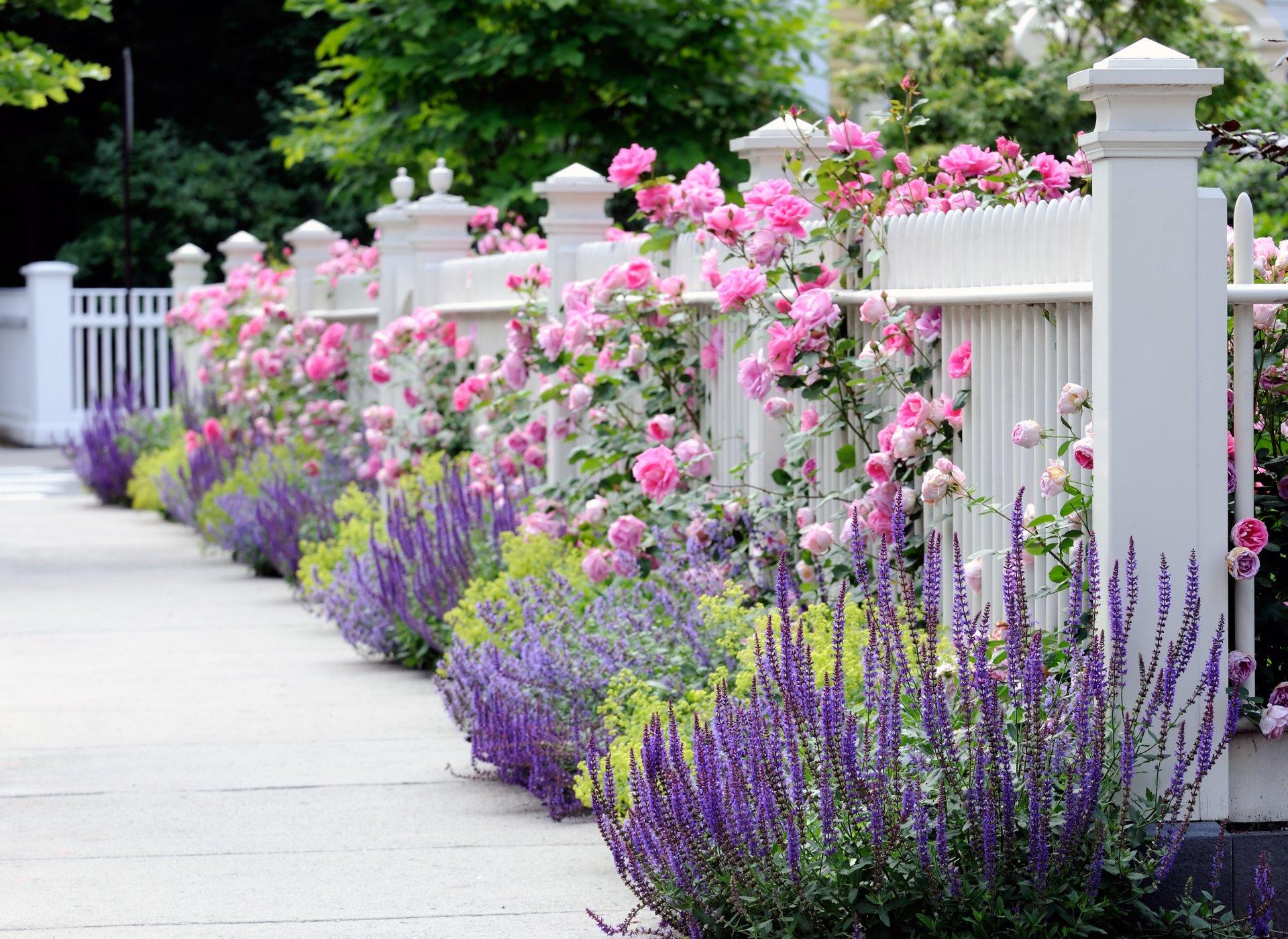 обои на рабочий стол цветы в саду на даче № 225493 без смс