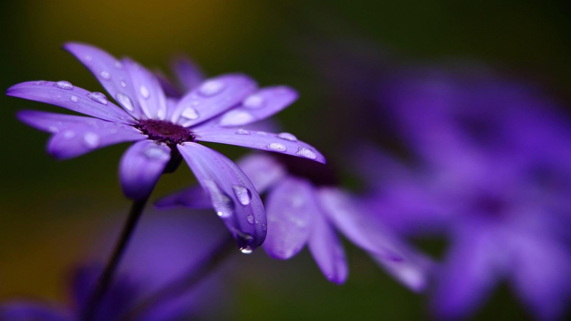 Цветок фиолетовый макро загрузить