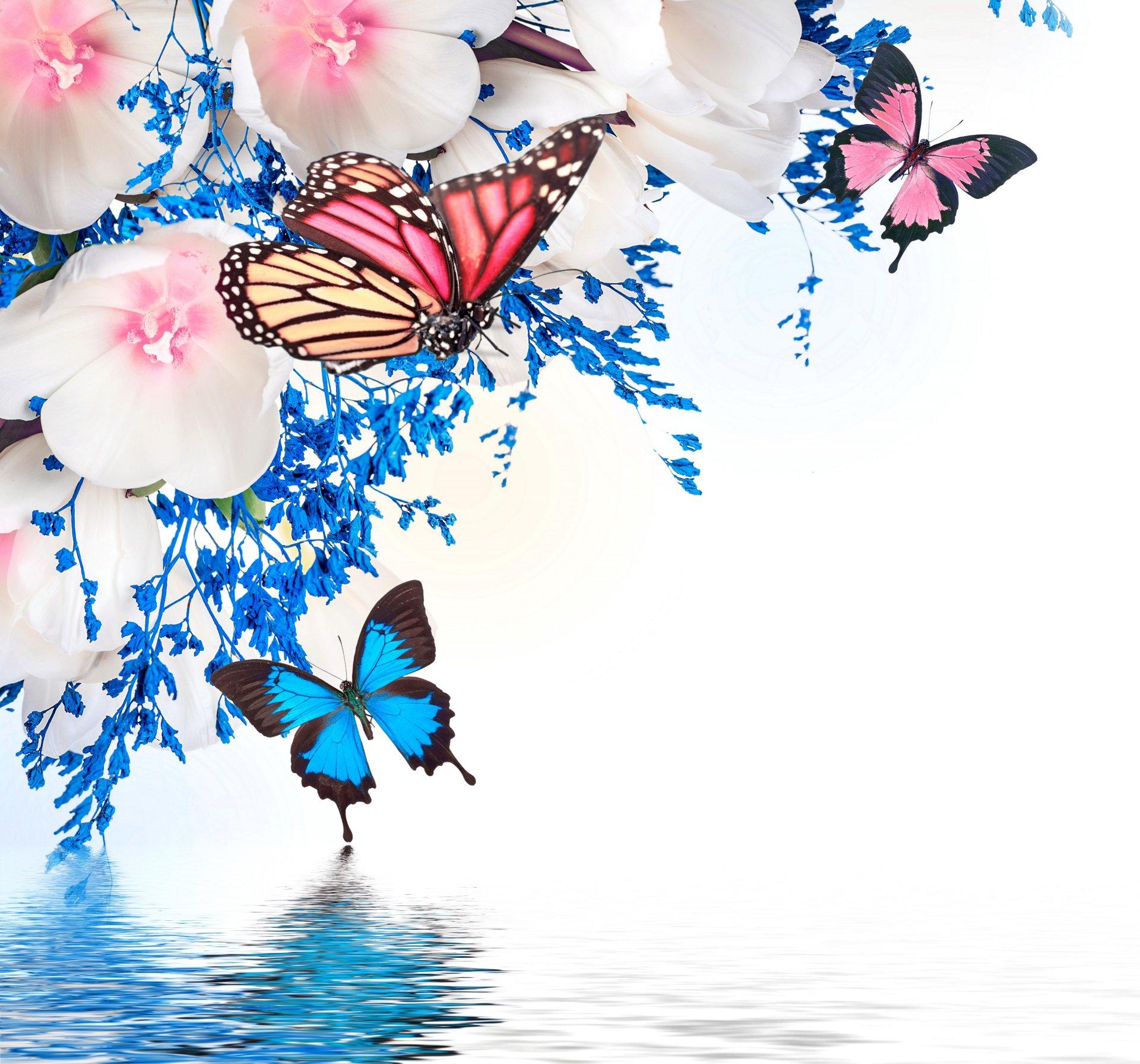Кубками, открытка с бабочкой для фотошопа