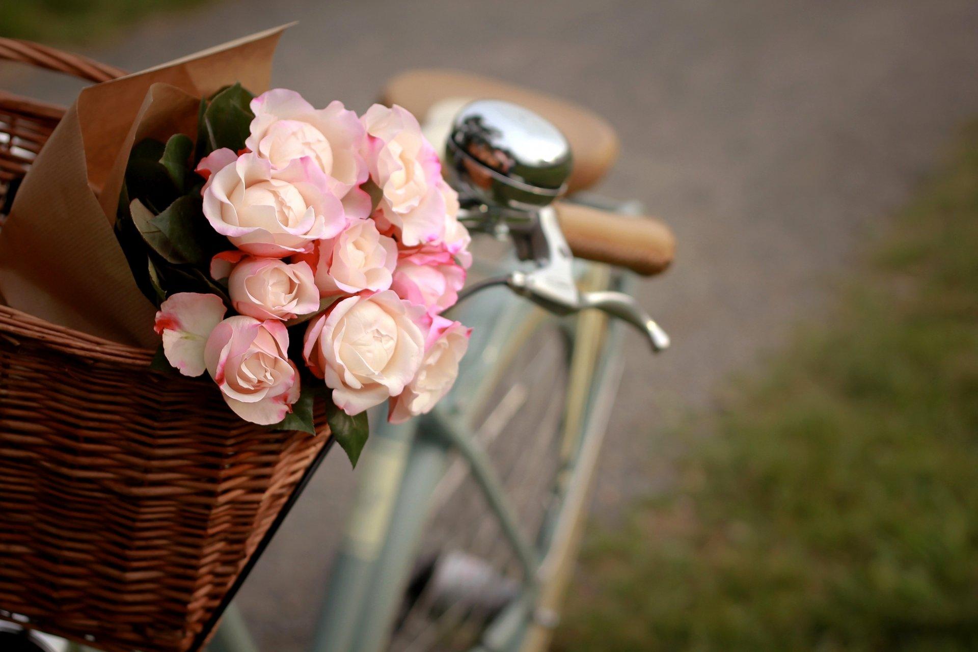 цветы букет розы скамейка природа без смс