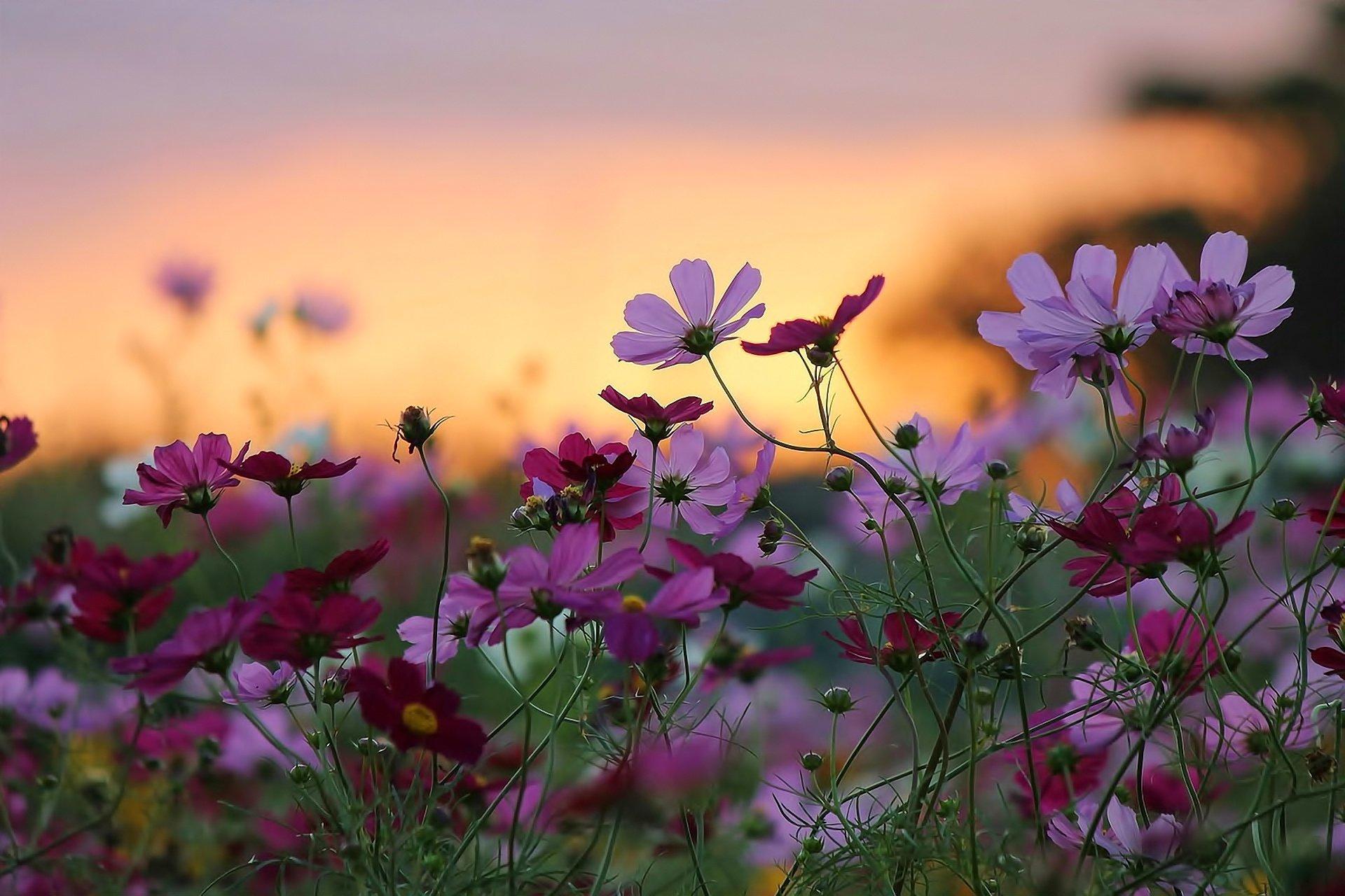 Обои цветы, широкоформатные. Природа foto 6