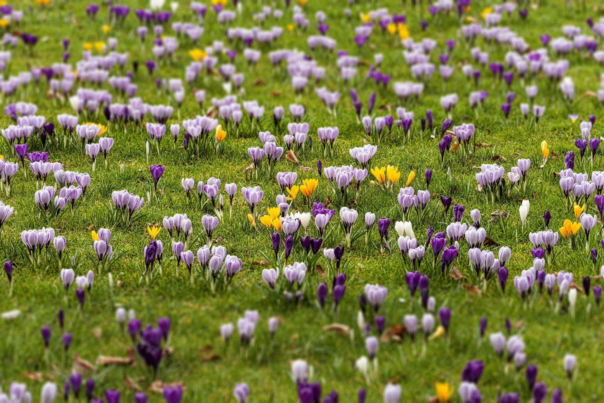 Весенний цветущий луг картинки