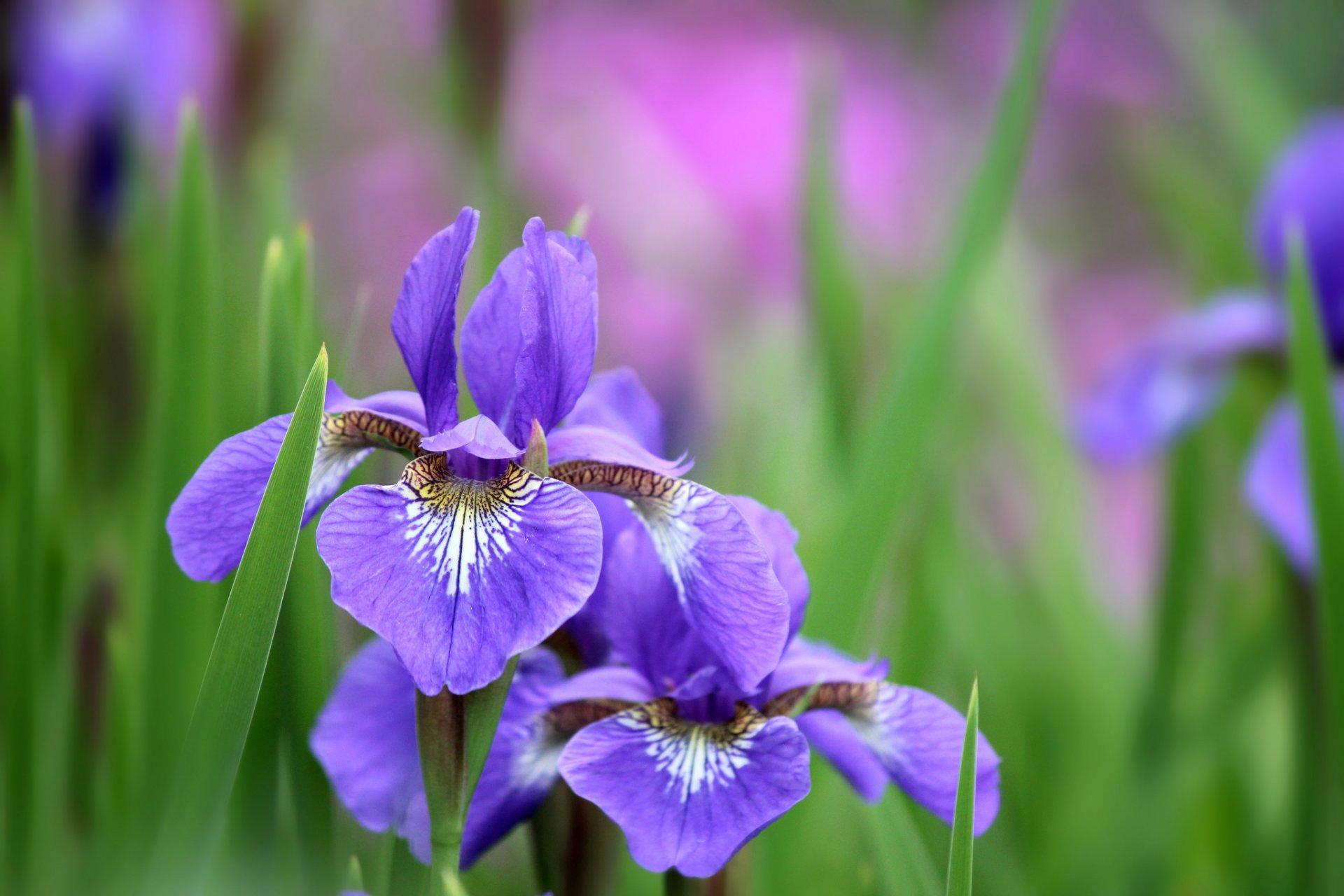 Hilary Duff Nude Photos Videos - Celeb Jihad Pictures of purple irises