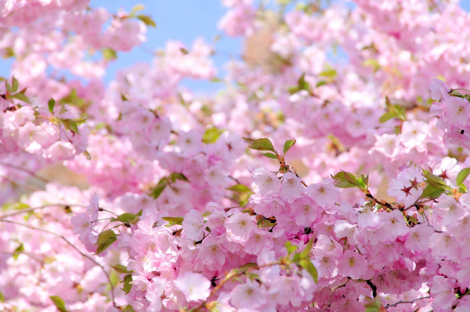 Фото весны на телефон