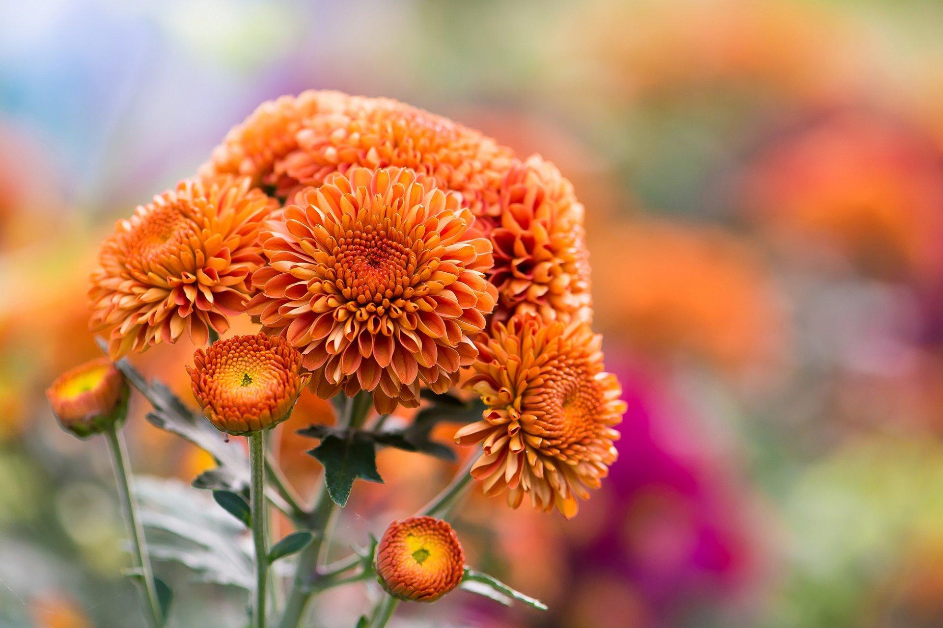 началось картинки на телефон красивые осенние цветы ходе акции спортивные