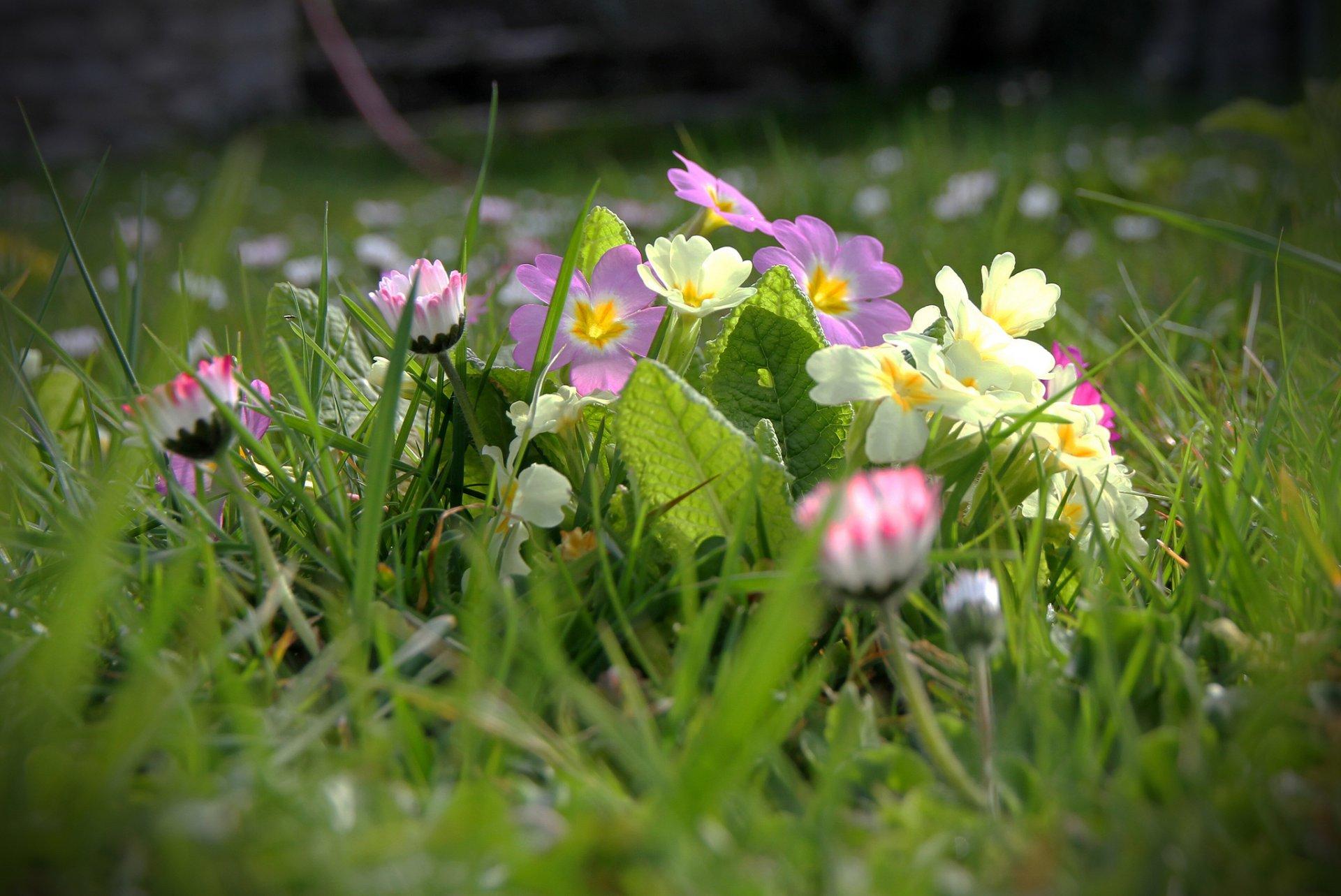 выбора обои на рабочий стол весна лето цветы процветания