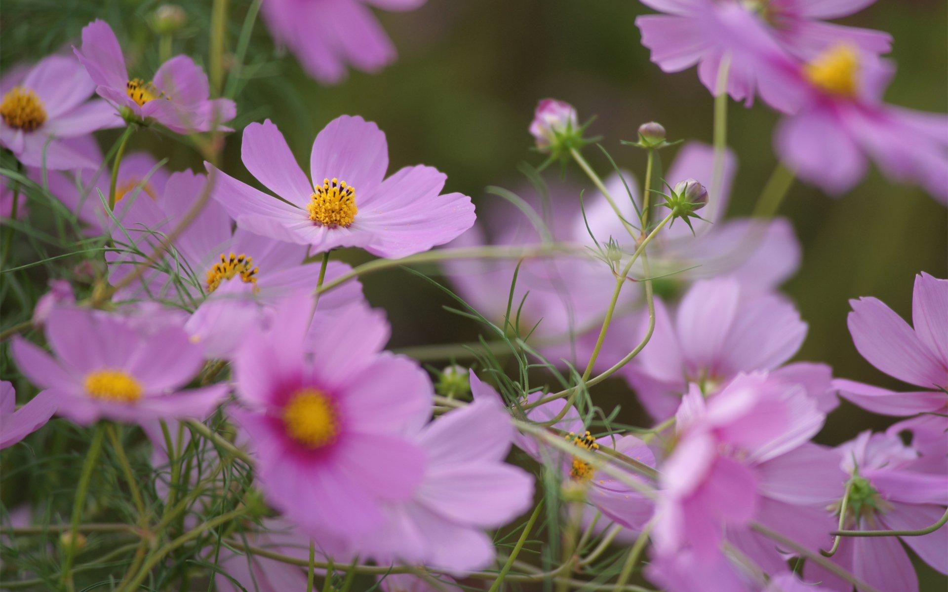 Полевые цветочки загрузить