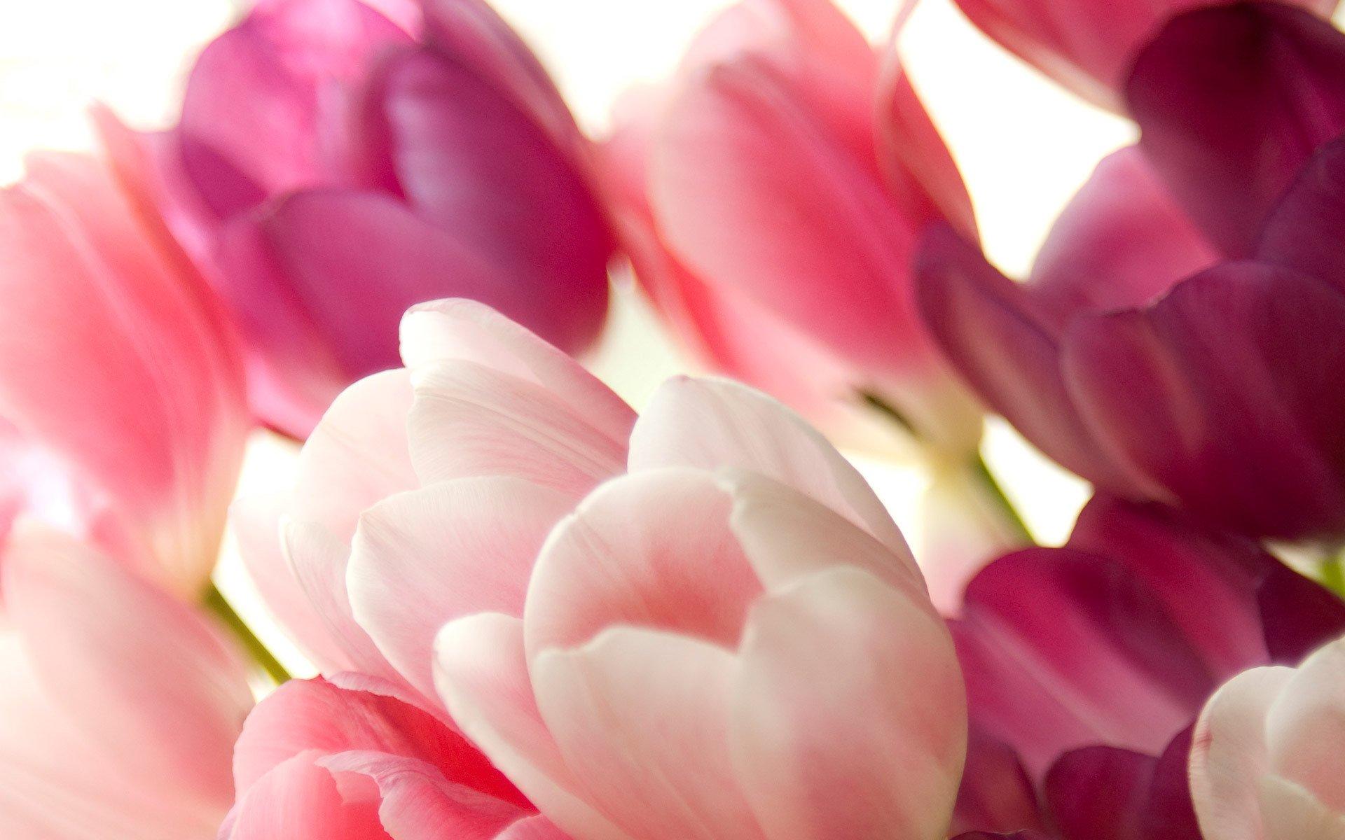 нежные-розовые цветы бесплатно