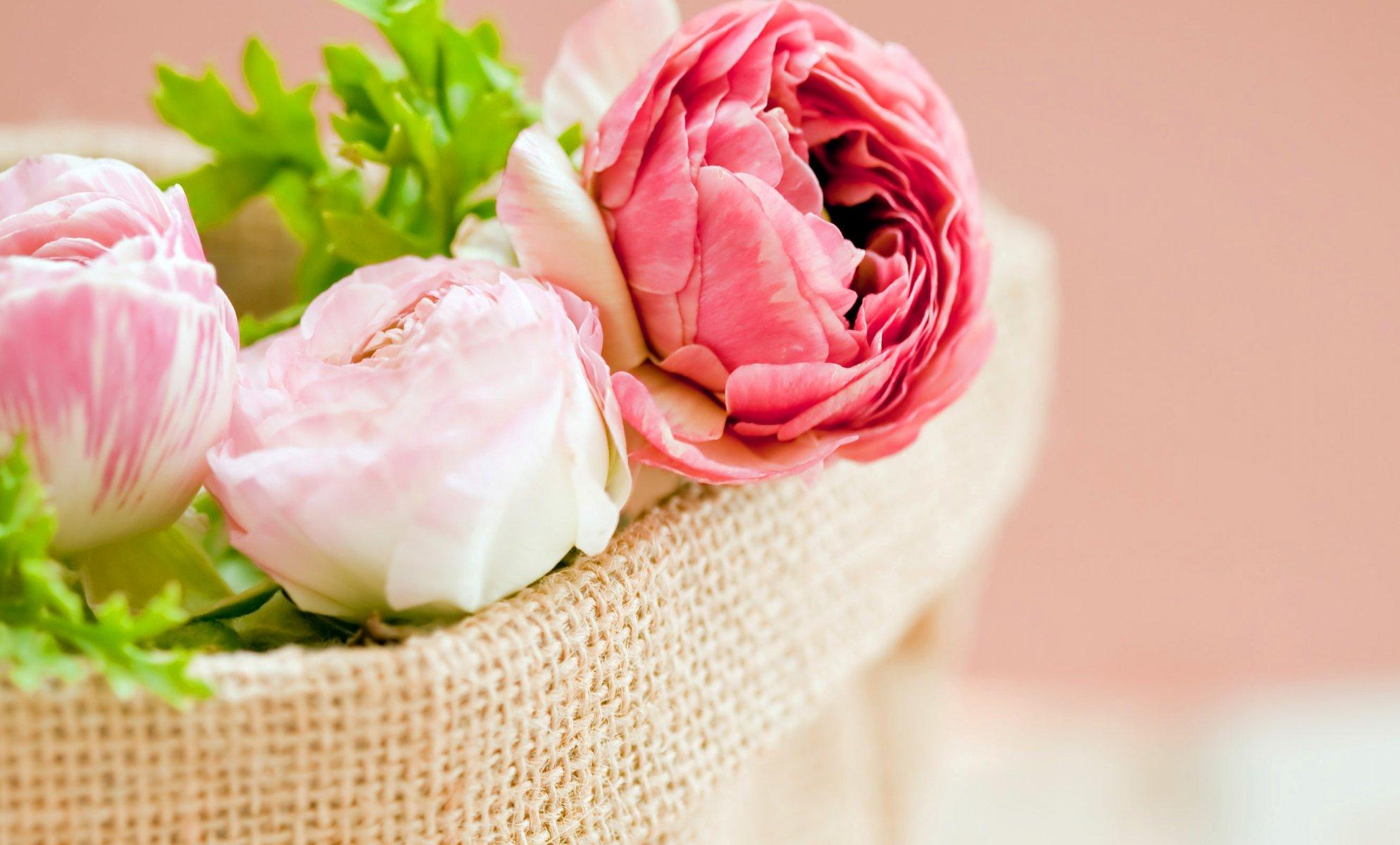 Пионовидные розы для открытки 50