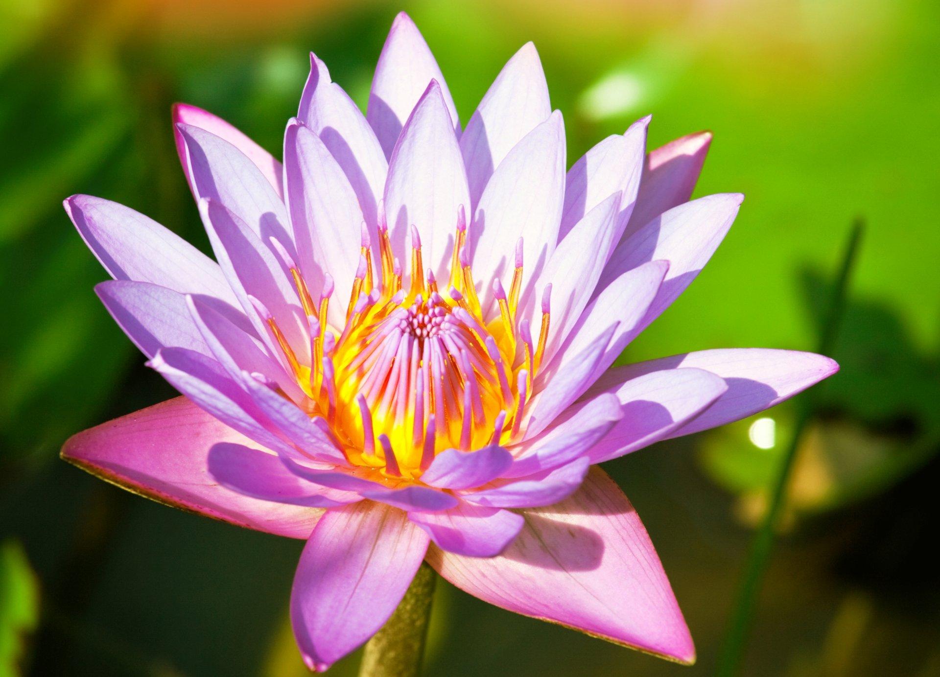 Красивые картинки цветов и растений