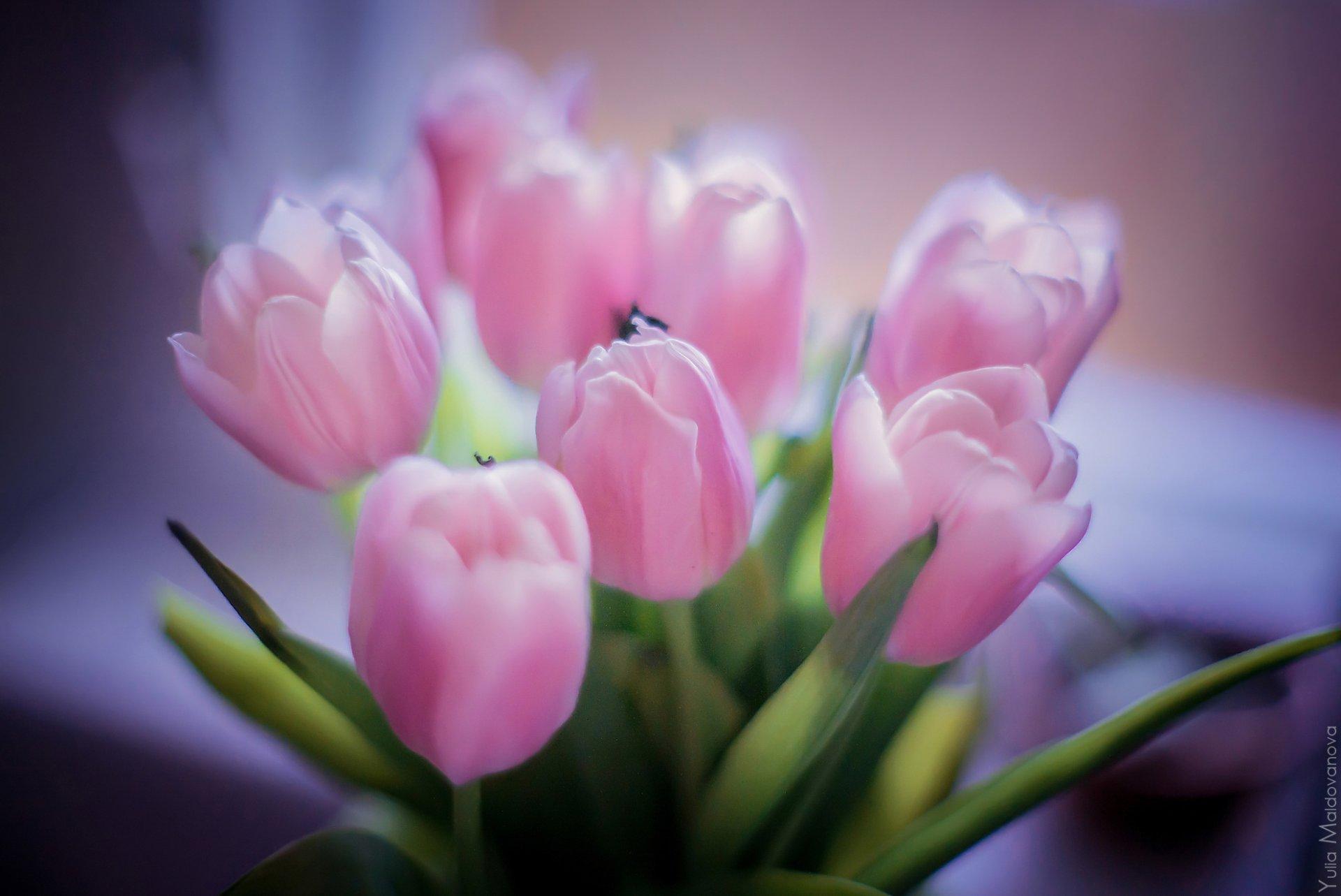 Обои Весна, позитив, макро фото тема. Природа foto 14