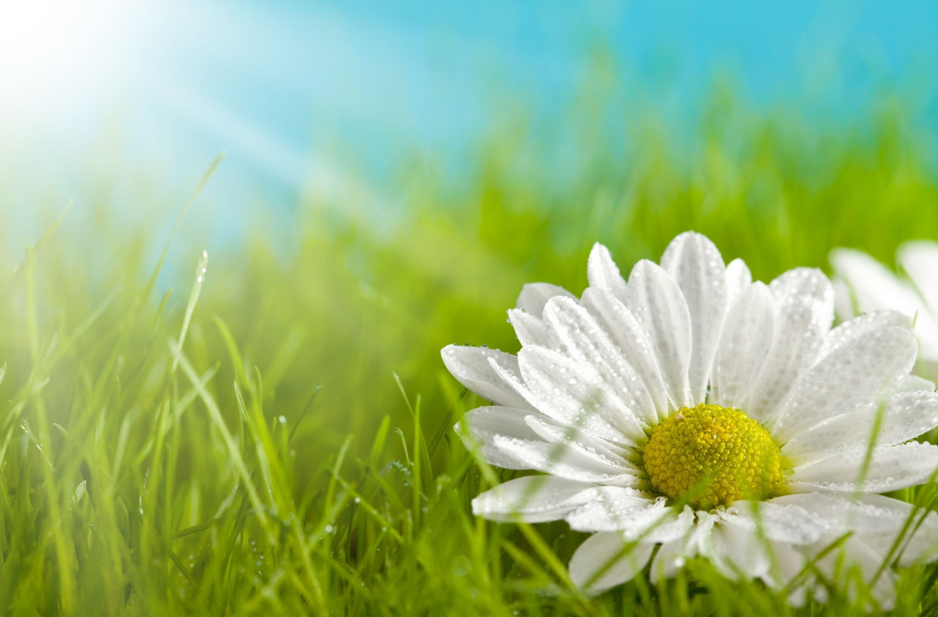 Желтый цветок в зеленой траве скачать