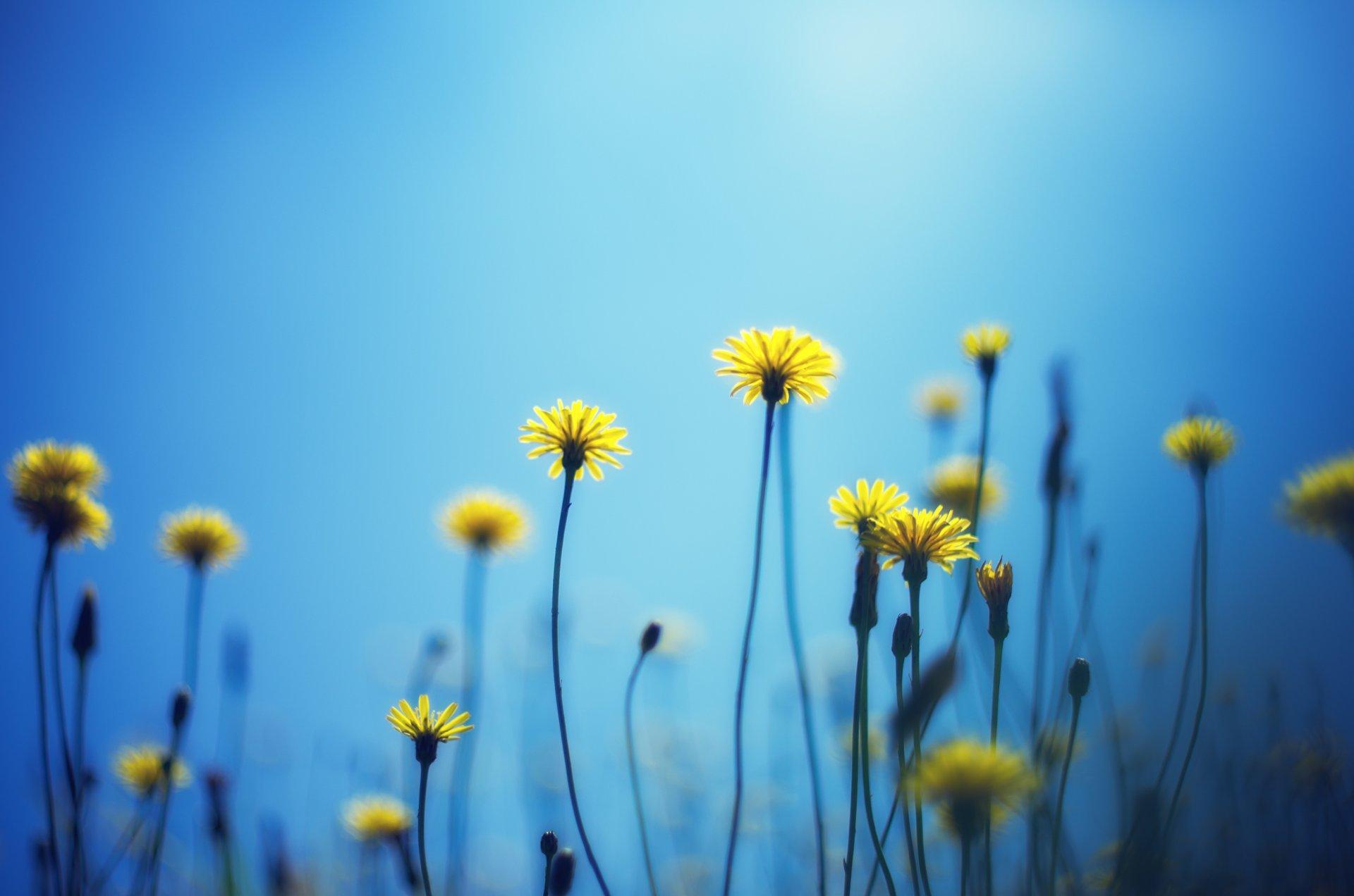 Картинки желто голубые