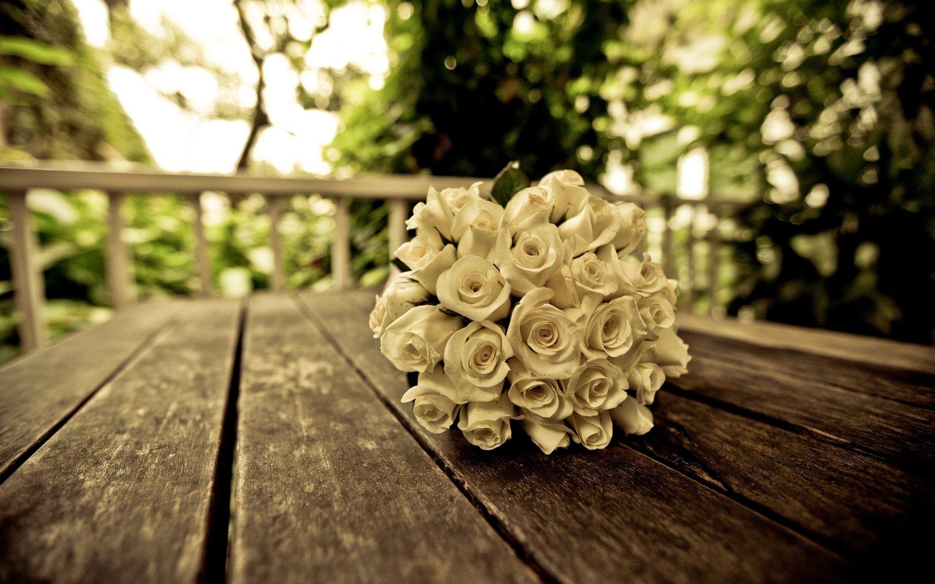 картинки на рабочий стол белые розы простым карандашом