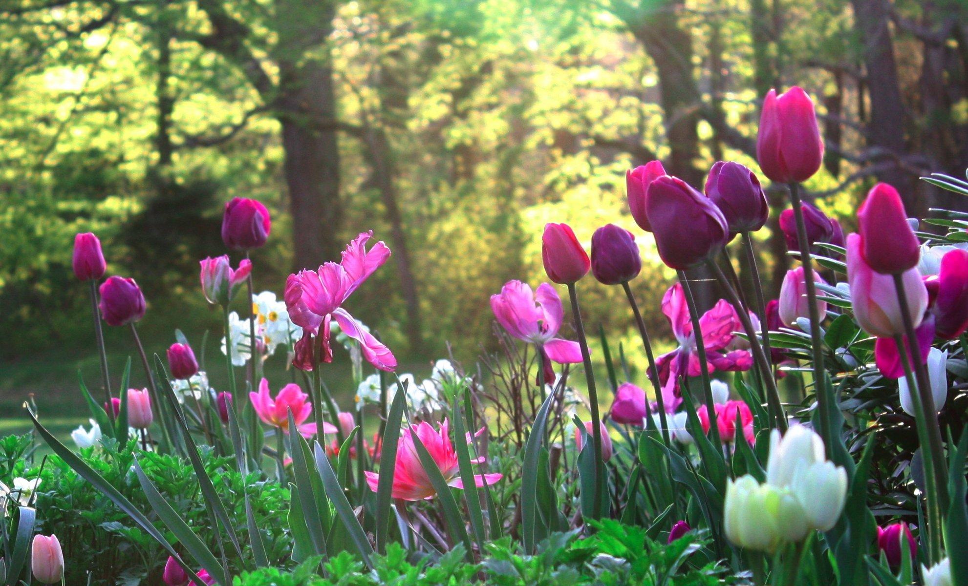 ТОП-7 самых красивых цветущих долин мира фото цветочных 79