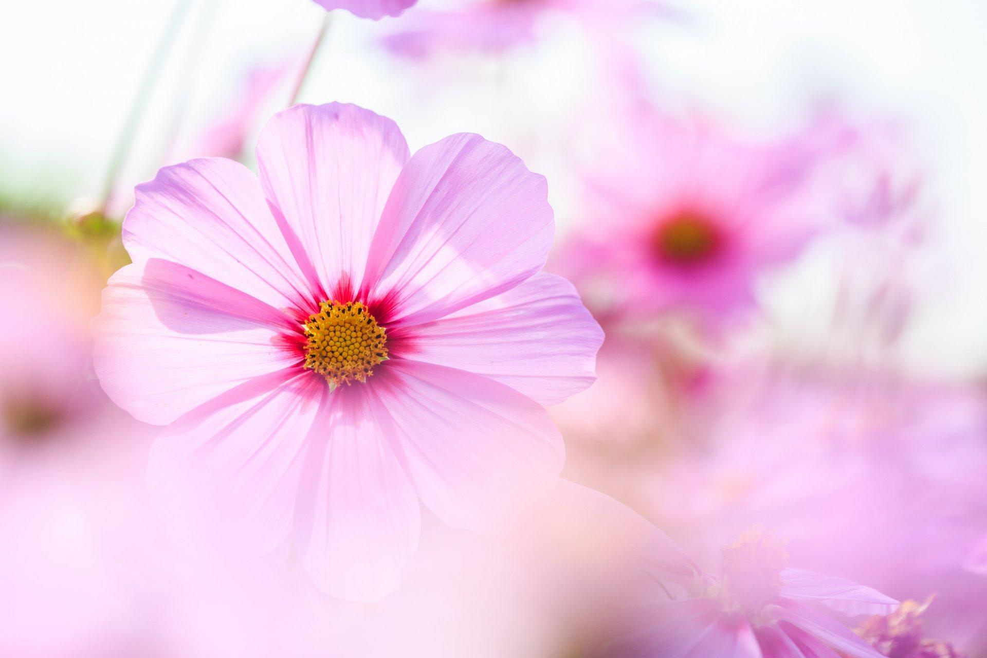 Нежный цветок открытки