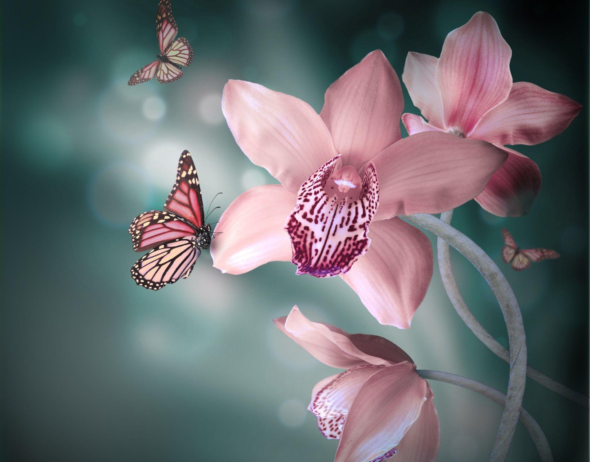 Картинки цветов орхидей для рабочего стола
