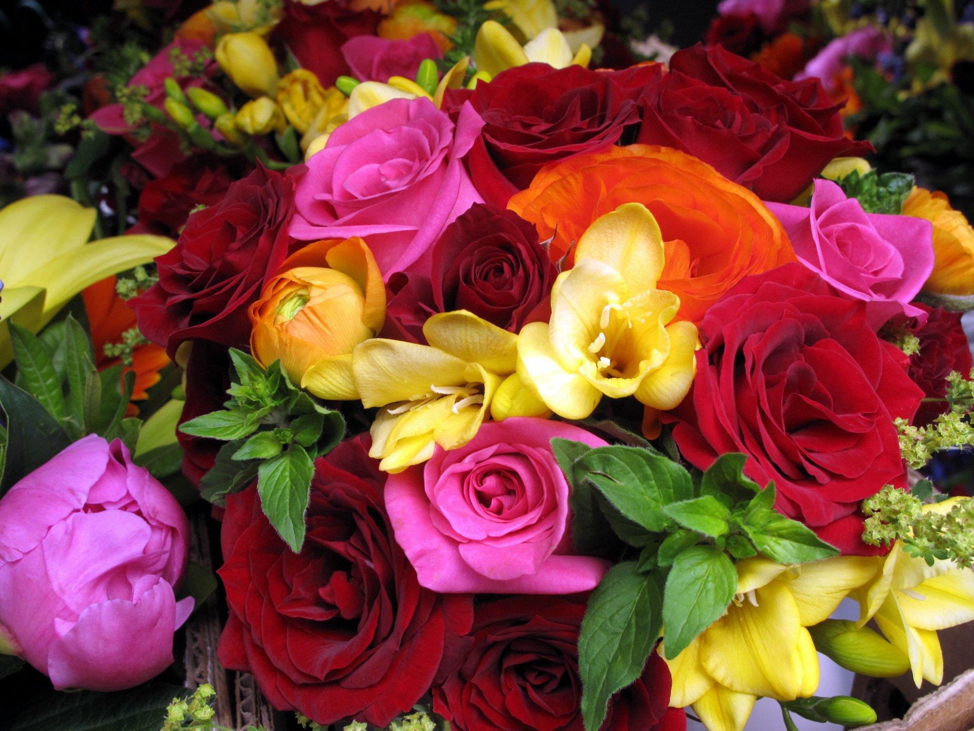 найти красивые фото цветов на первое сотейнике