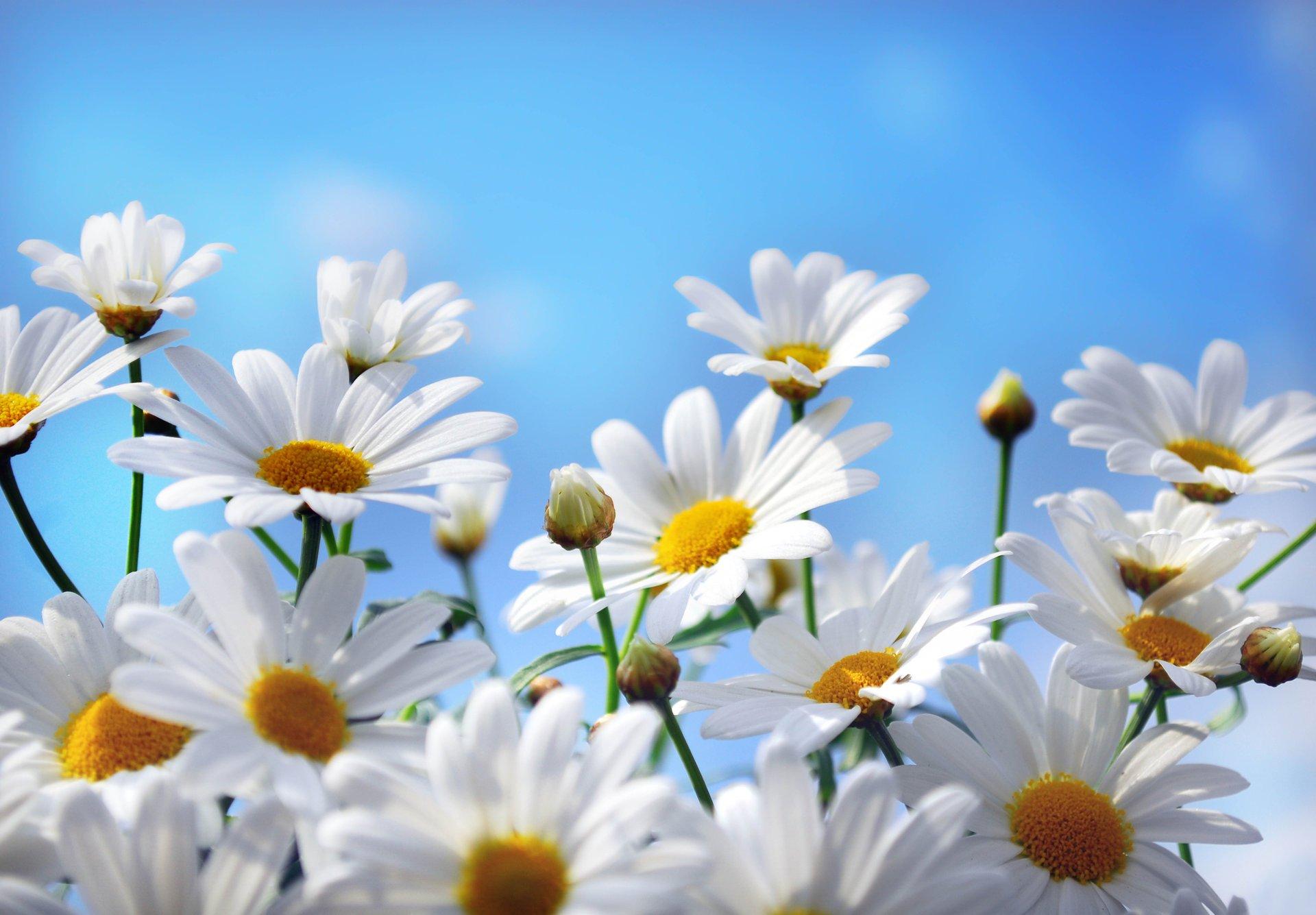 Обои На Телефон Красивые Картинки Природа Цветы