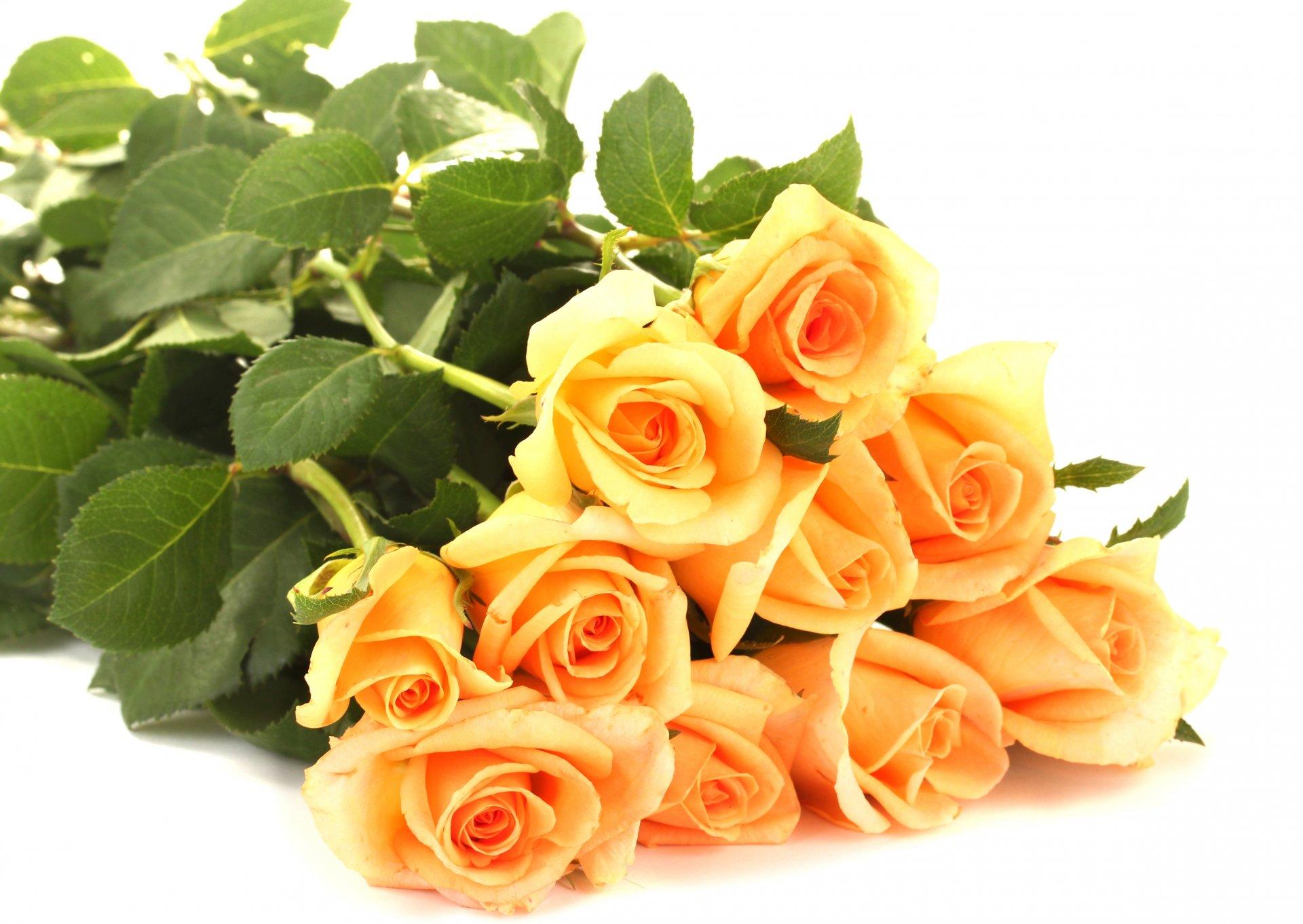 Открытка картинка роза