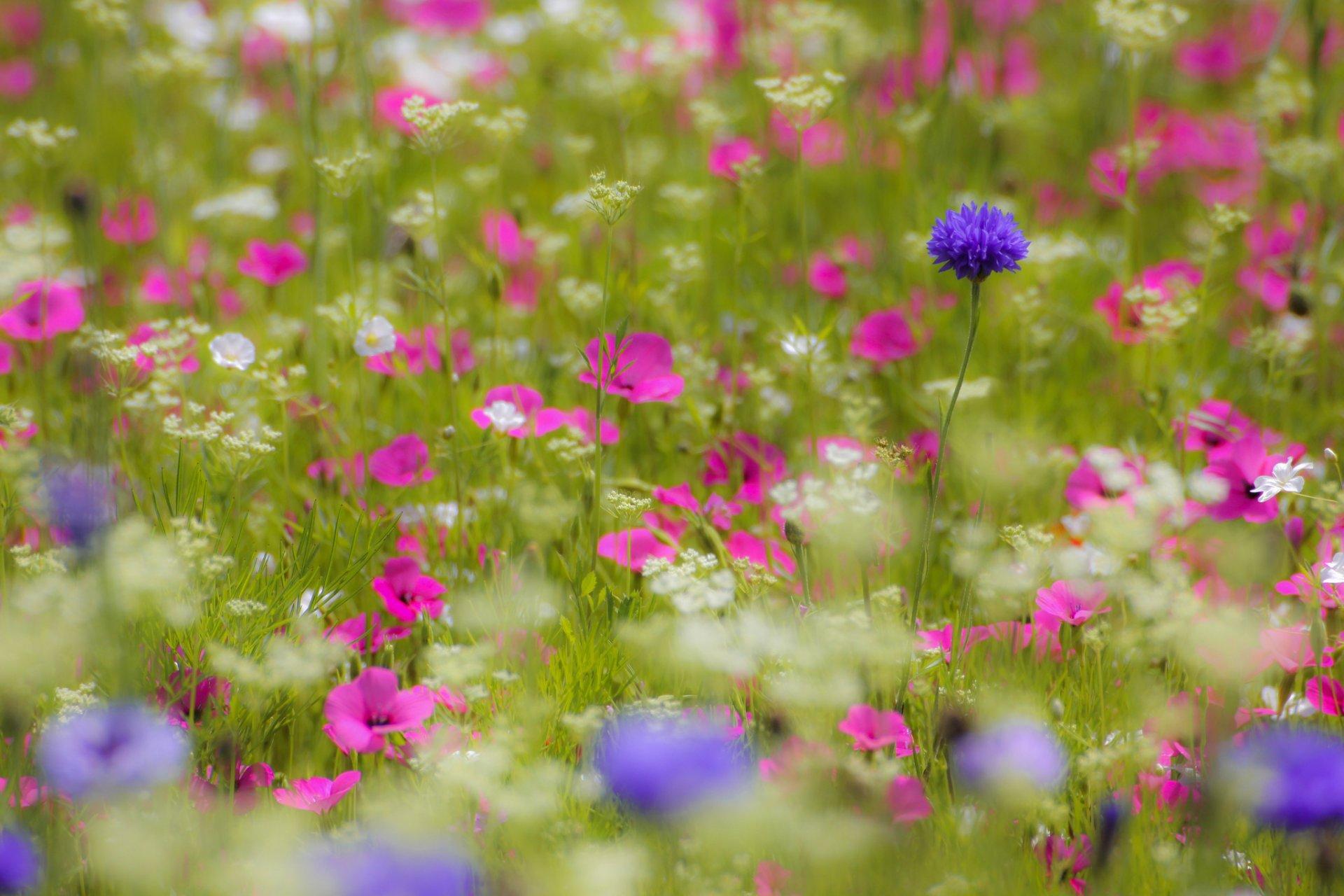Полевые цветочки без смс
