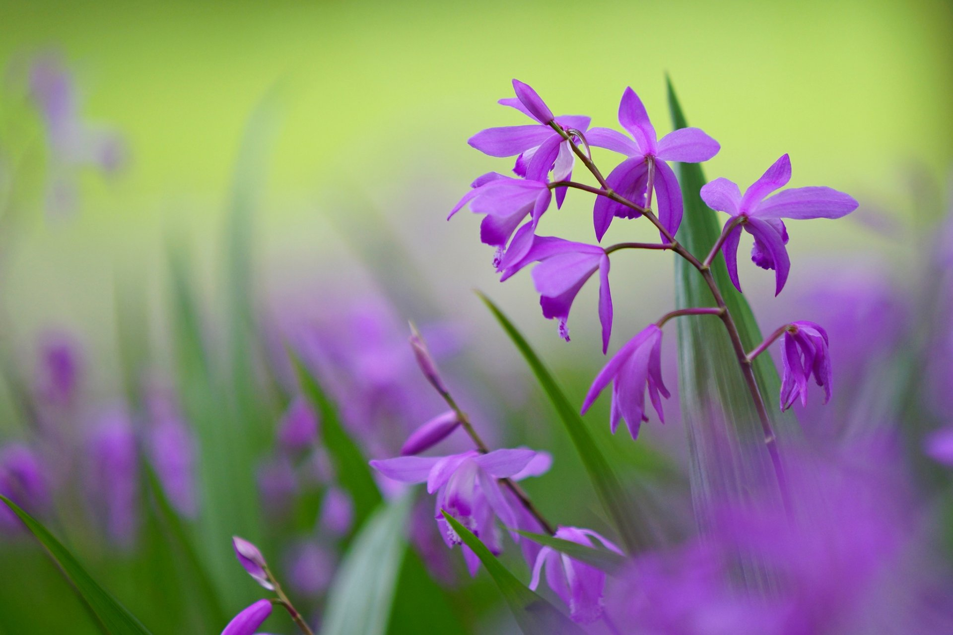 цветок фиолетово-зеленый макро загрузить