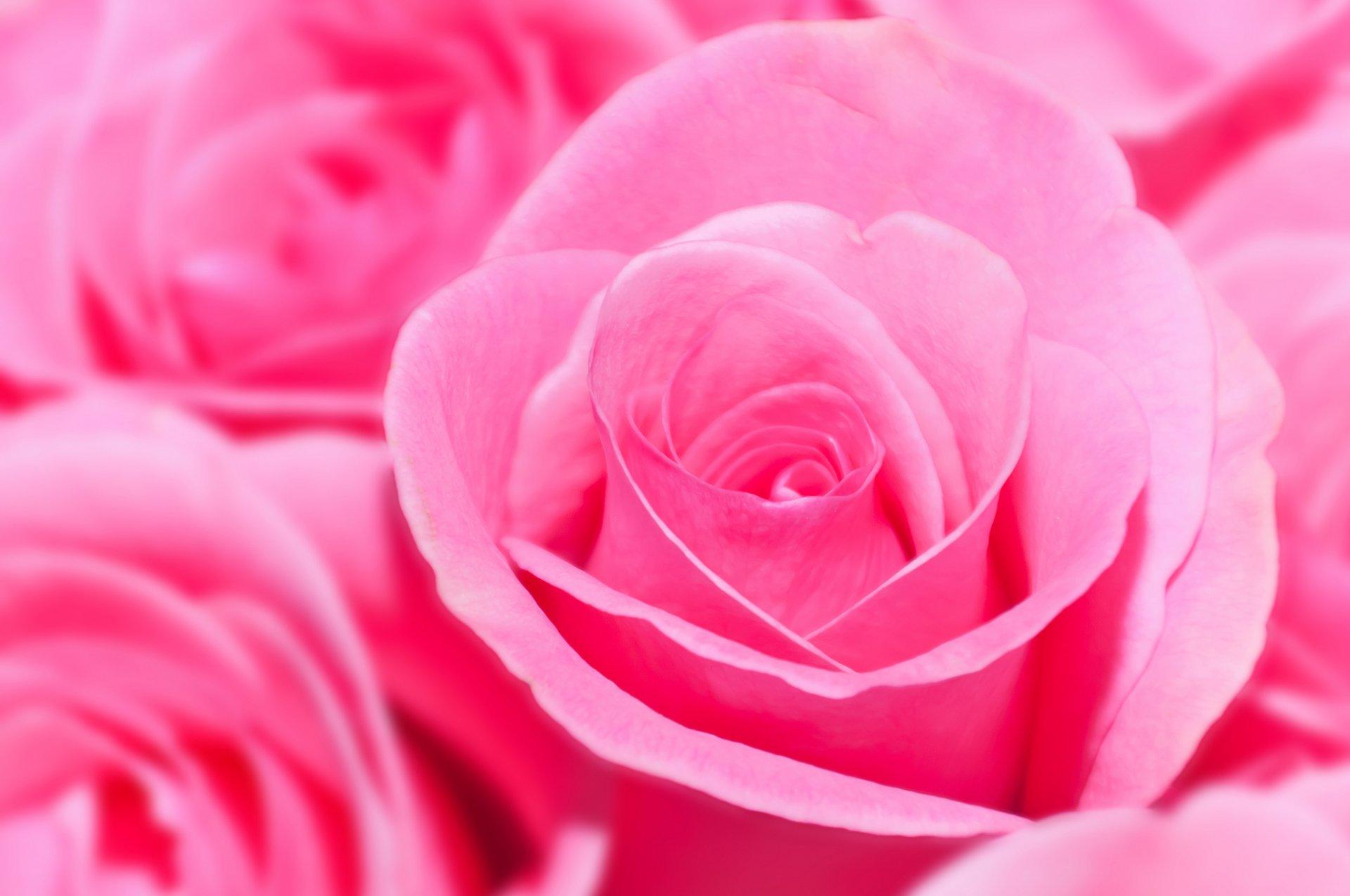 Красивые картинки розового цвета