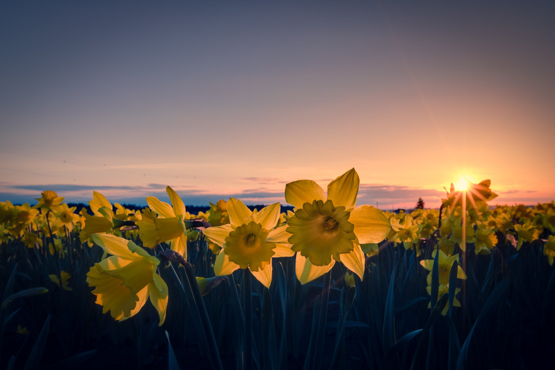поле желтое закат  № 680824 бесплатно