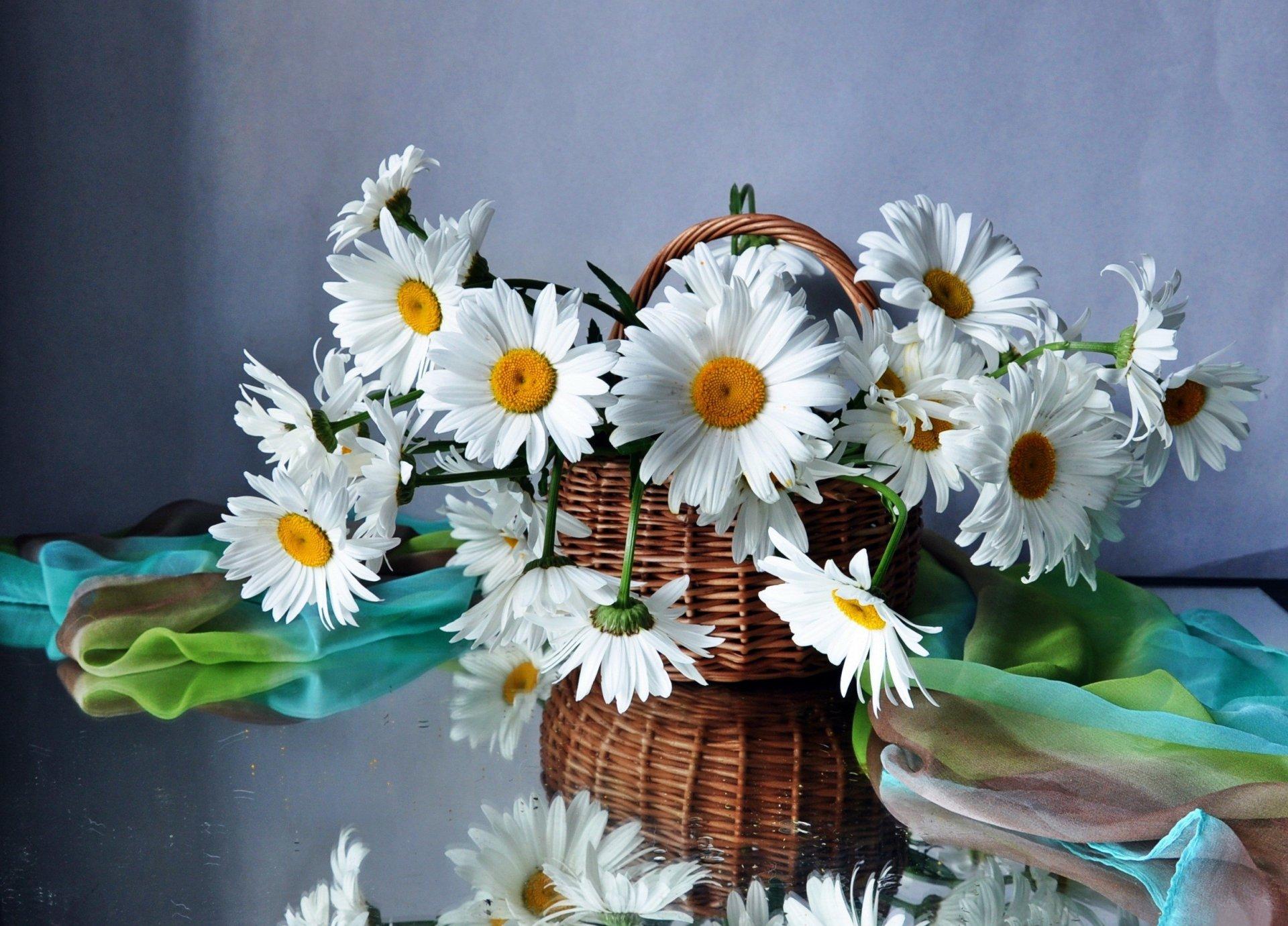 Картинки на рабочий стол полевые цветы самые красивые, днем бракосочетания
