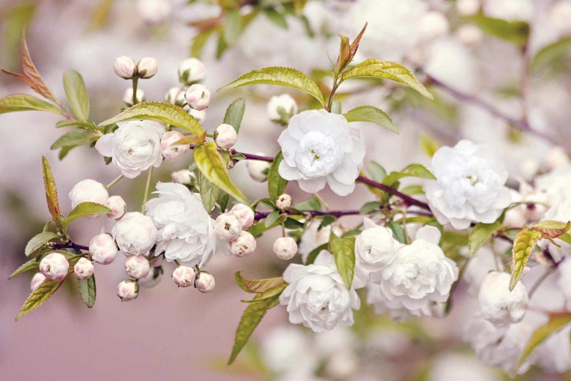 Обои цветы, широкоформатные. Природа foto 19