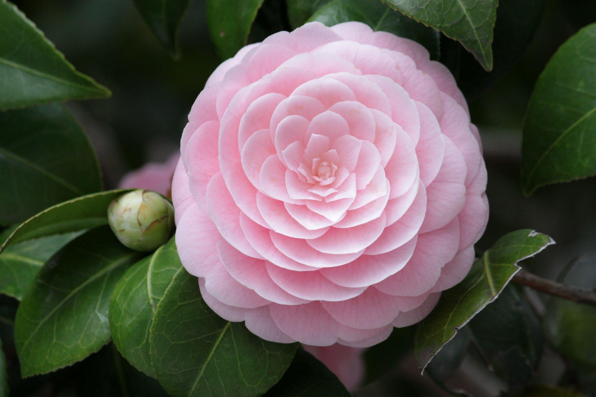 Фотографии цветка ириса установленные