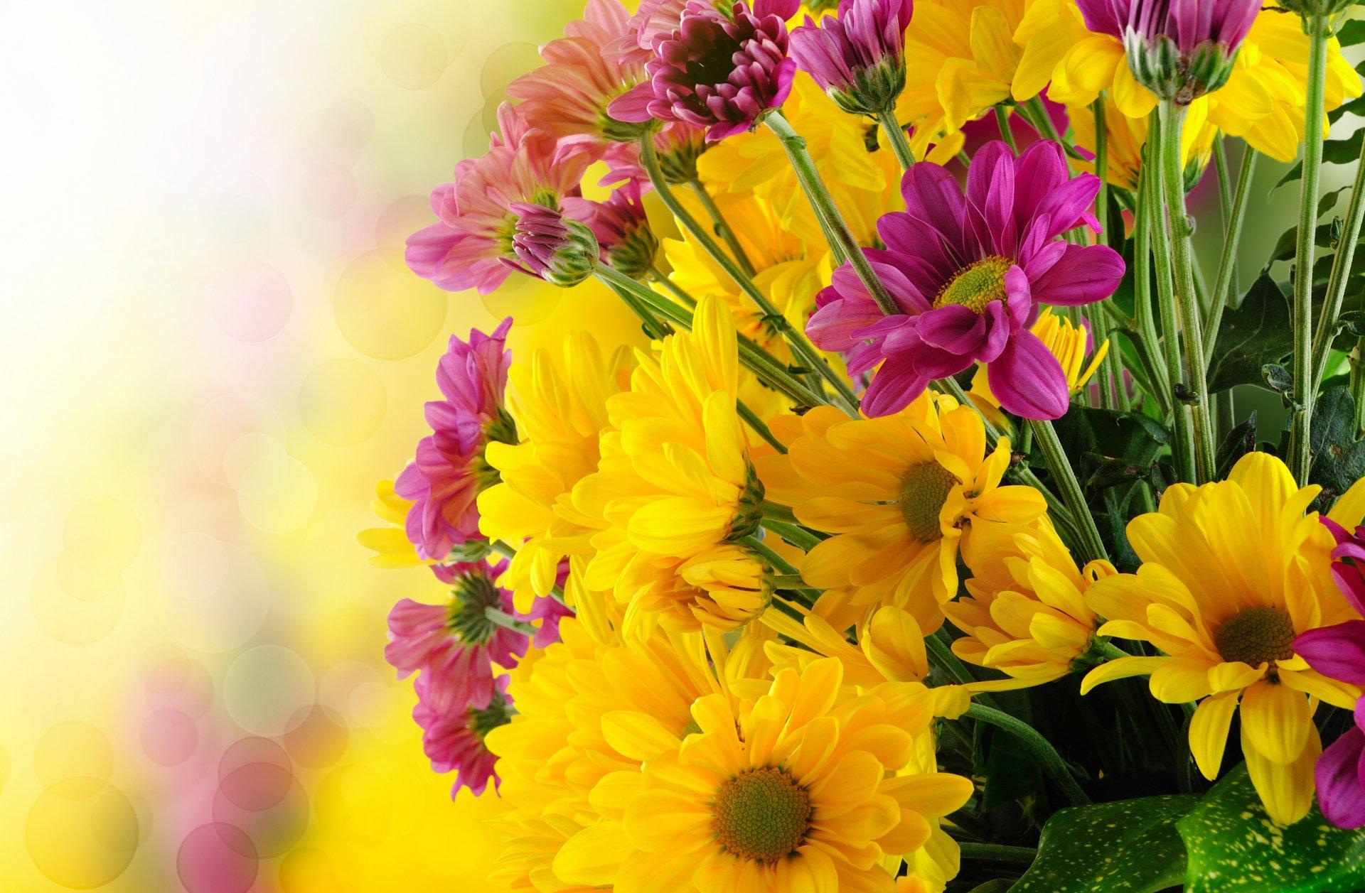 Днем, большие открытки с цветами