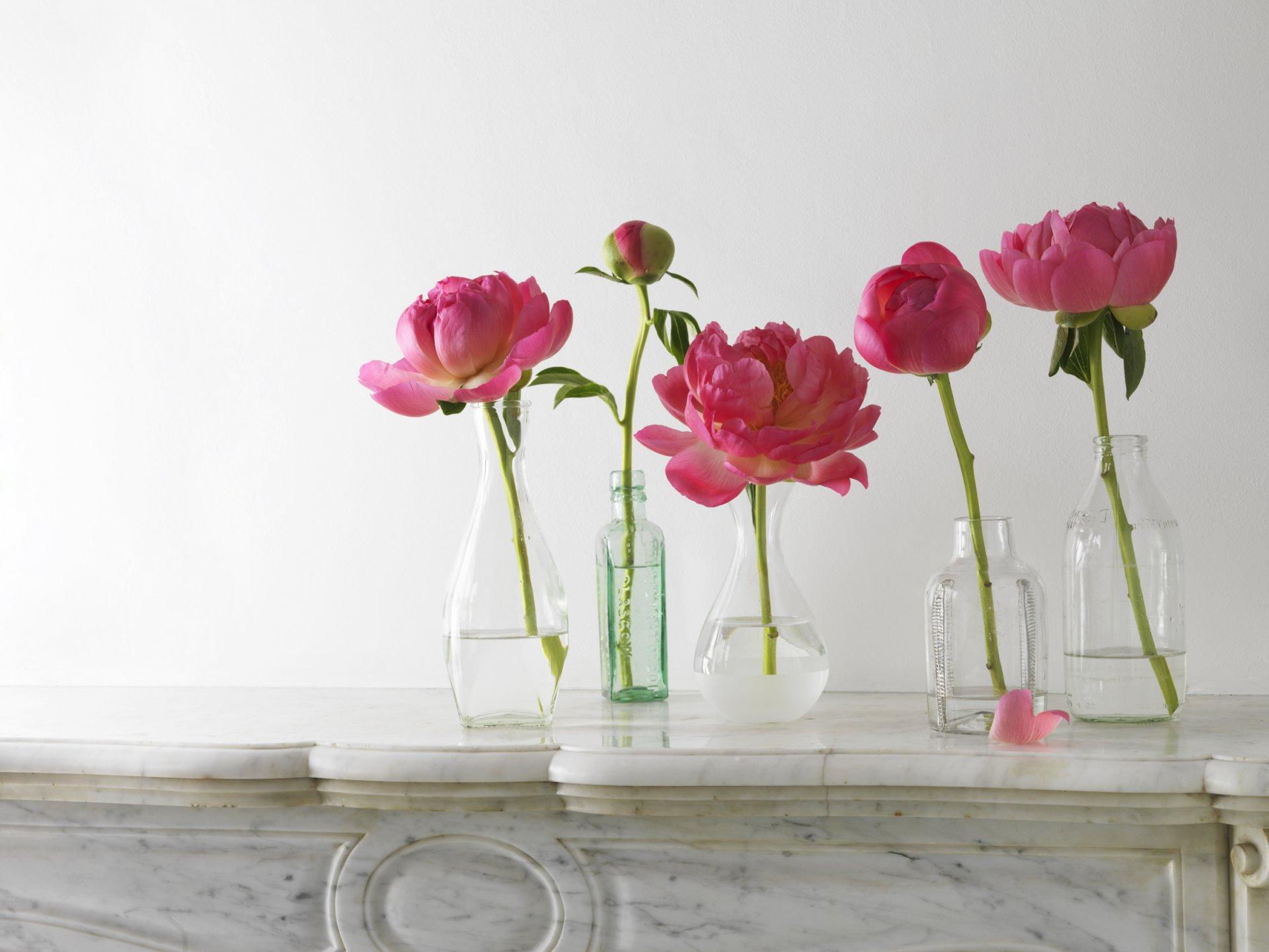Обои на рабочий стол цветы широкоформатные пионы и духи