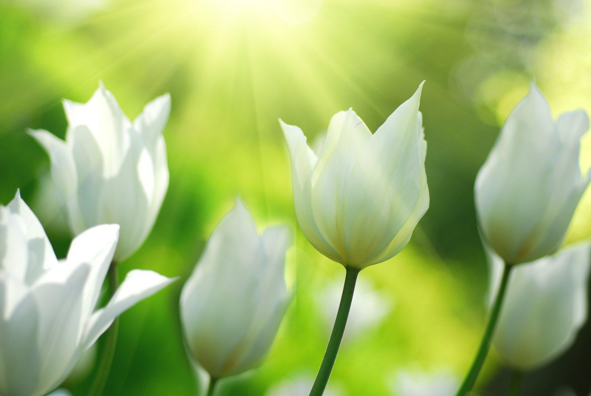 белые цветы на зеленом фоне фото высокого разрешения этого