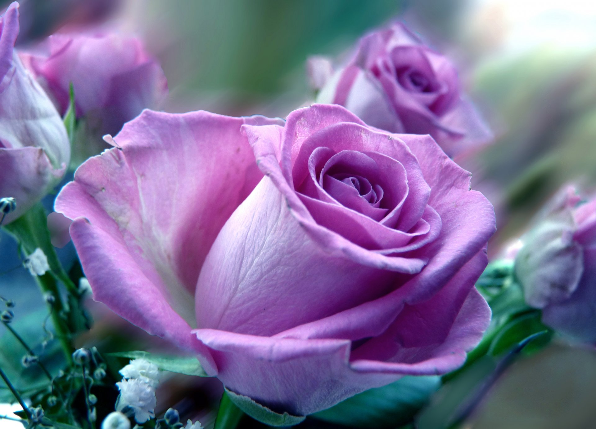 Каталог сиреневых цветов и их фото
