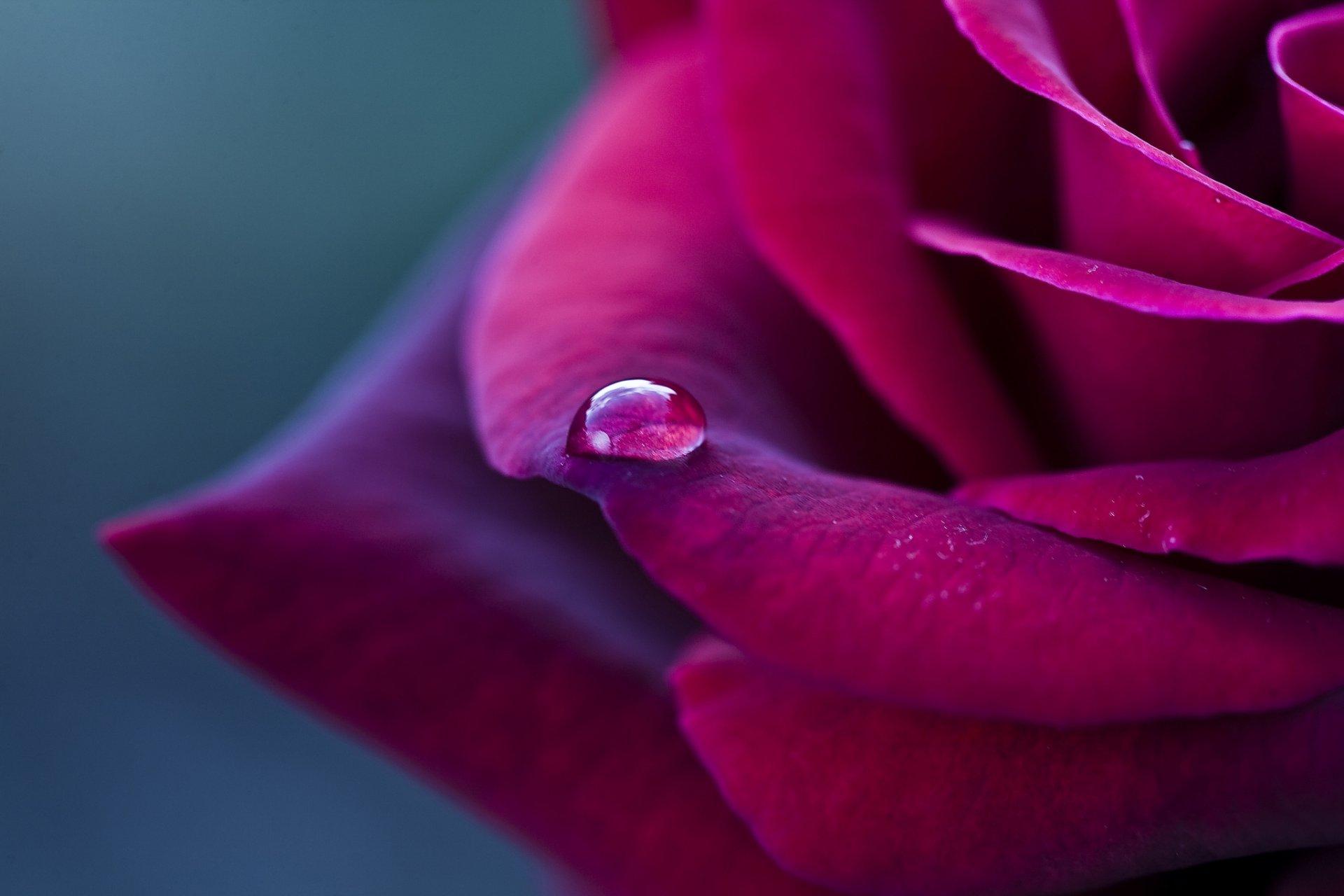 Цветок капли лепестки скачать