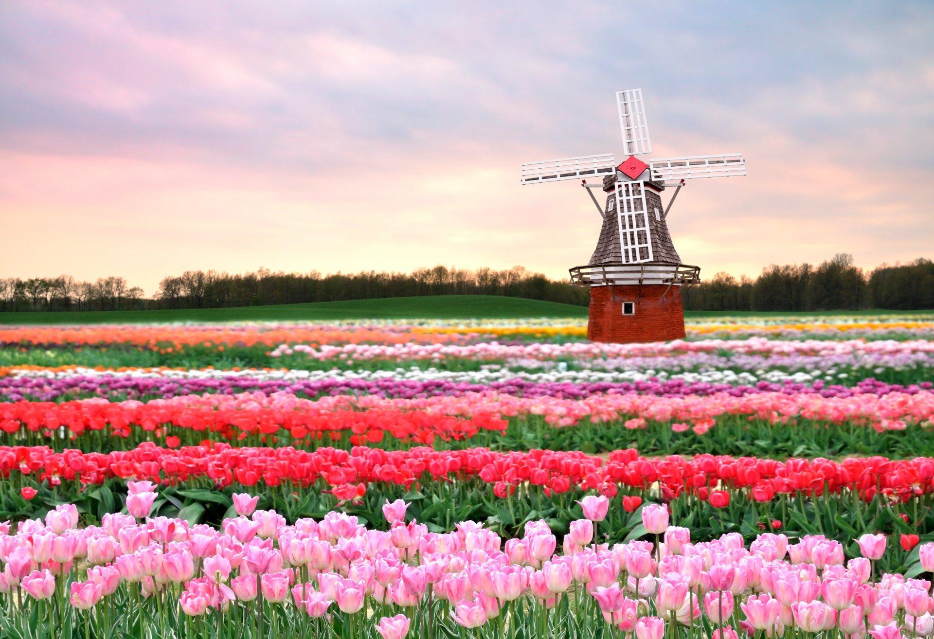 Мельница с цветами