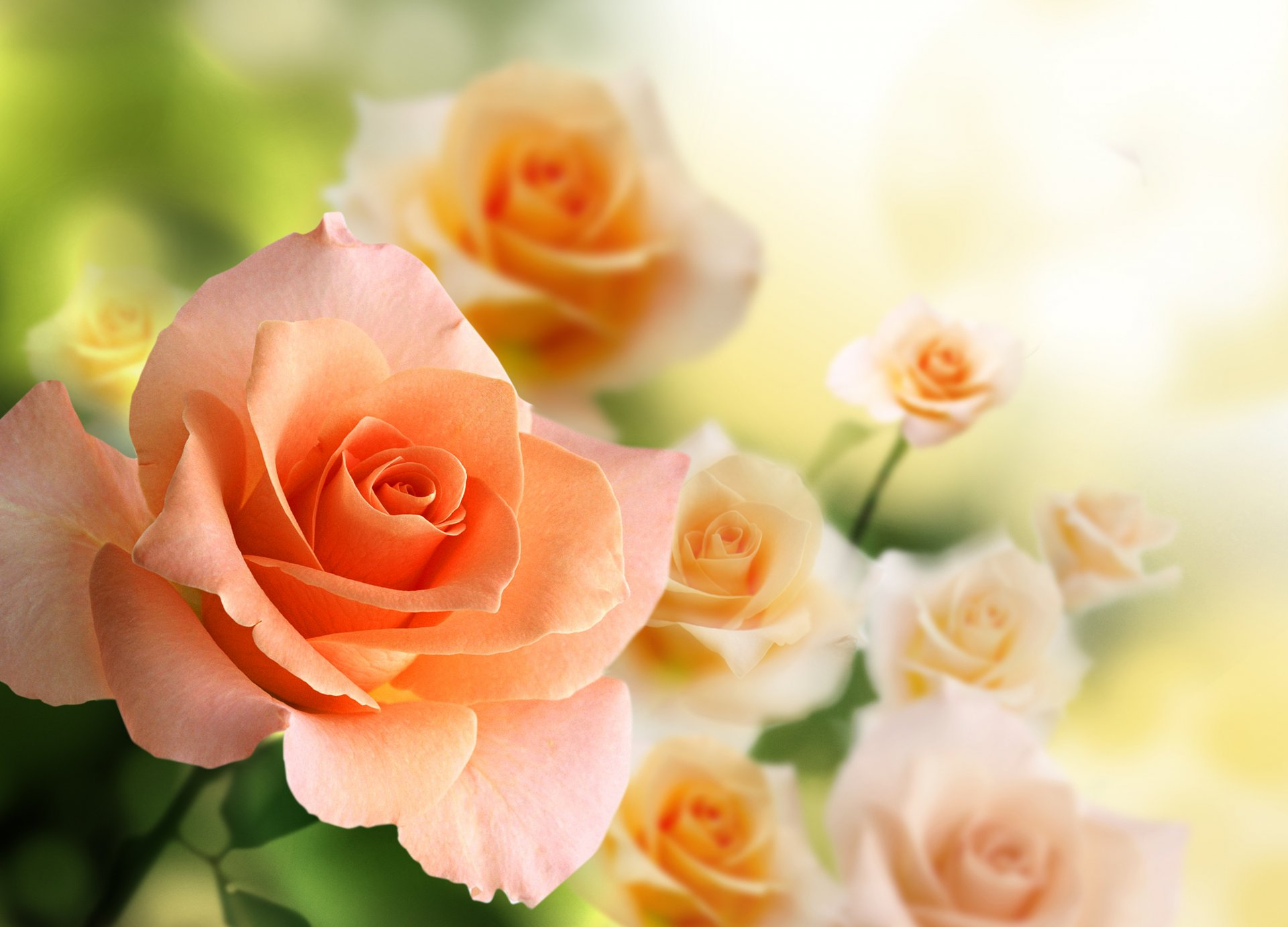 Открытки, нежный цветок открытки