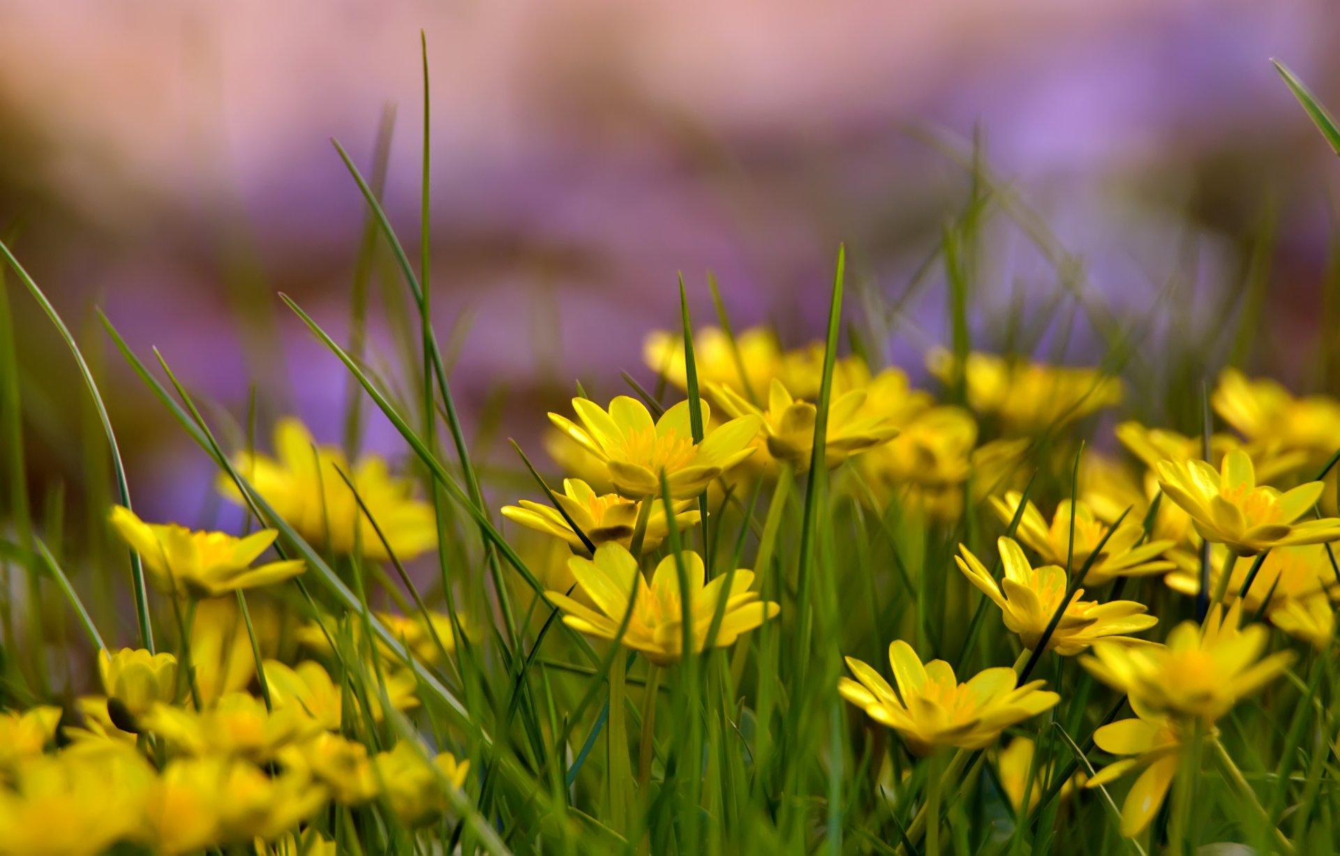 природа цветы желтый nature flowers yellow бесплатно