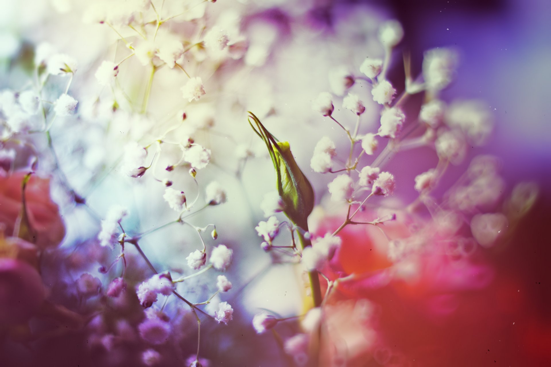 парках картинки цветы на больших на побольше экран девушке, которая занималась