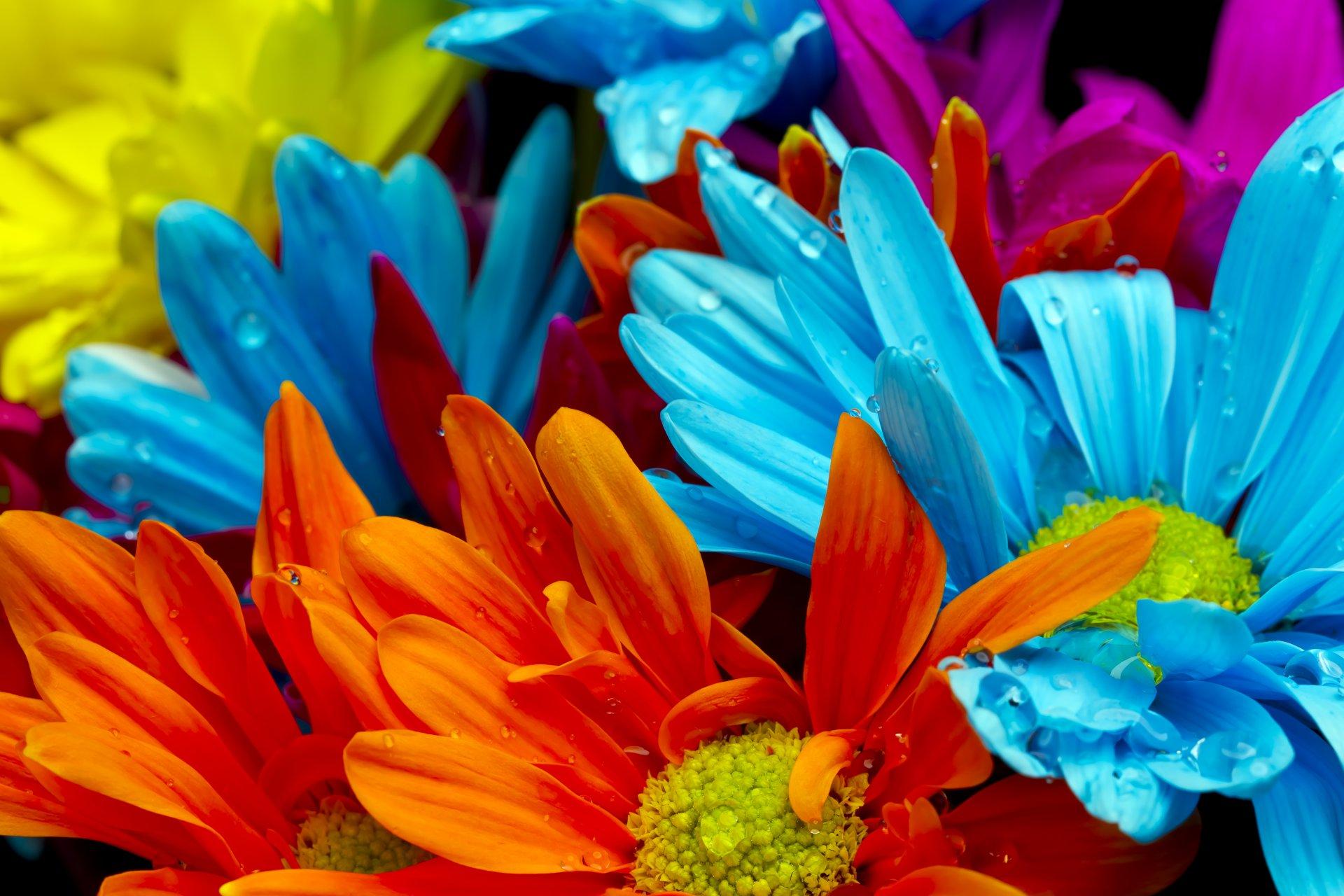 Разноцветный цветок