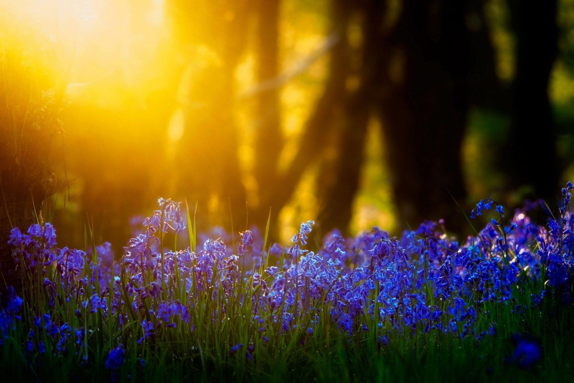 природа цветы трава мельниц восход солнце  № 2556651  скачать
